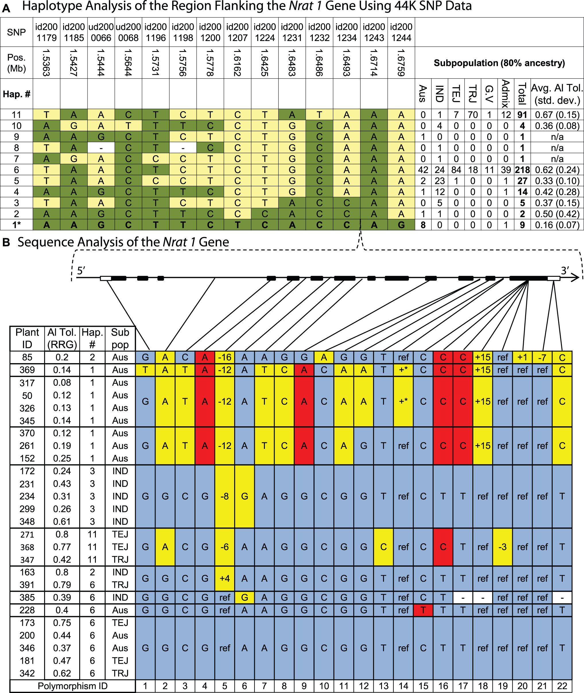 Haplotype analysis of the <i>Nrat1</i> gene region.