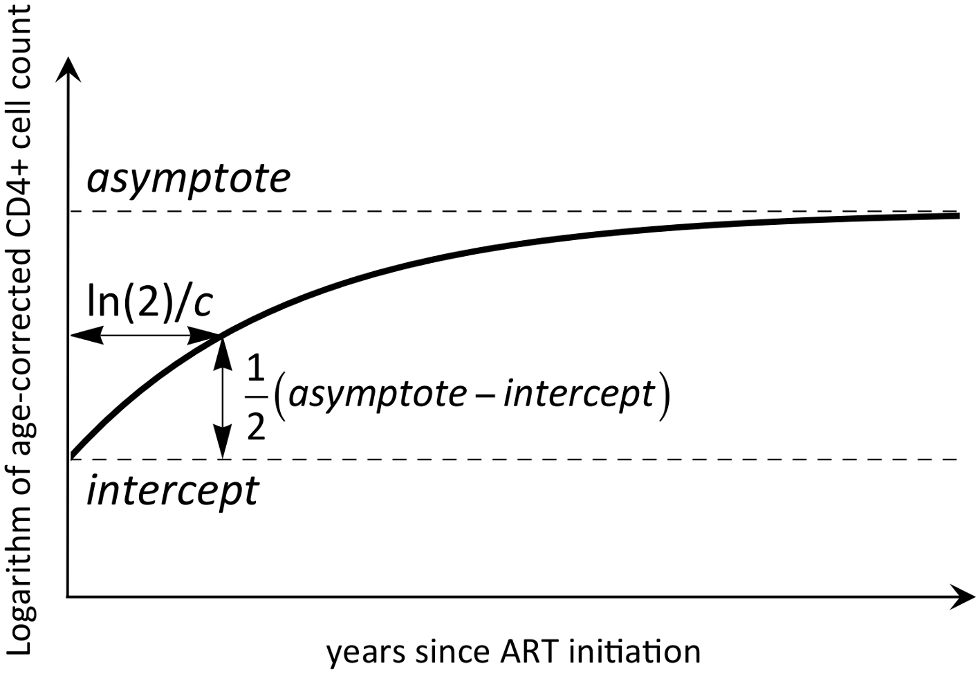 An illustrative representation of the mathematical model used to describe CD4 reconstitution.