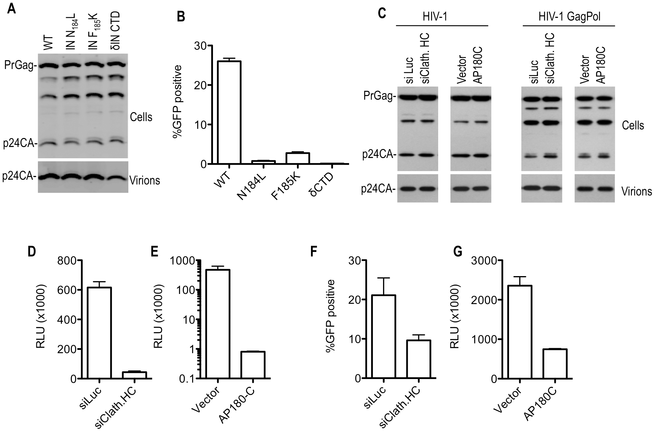 Effect of Pol mutations and clathrin on HIV-1 infectivity.