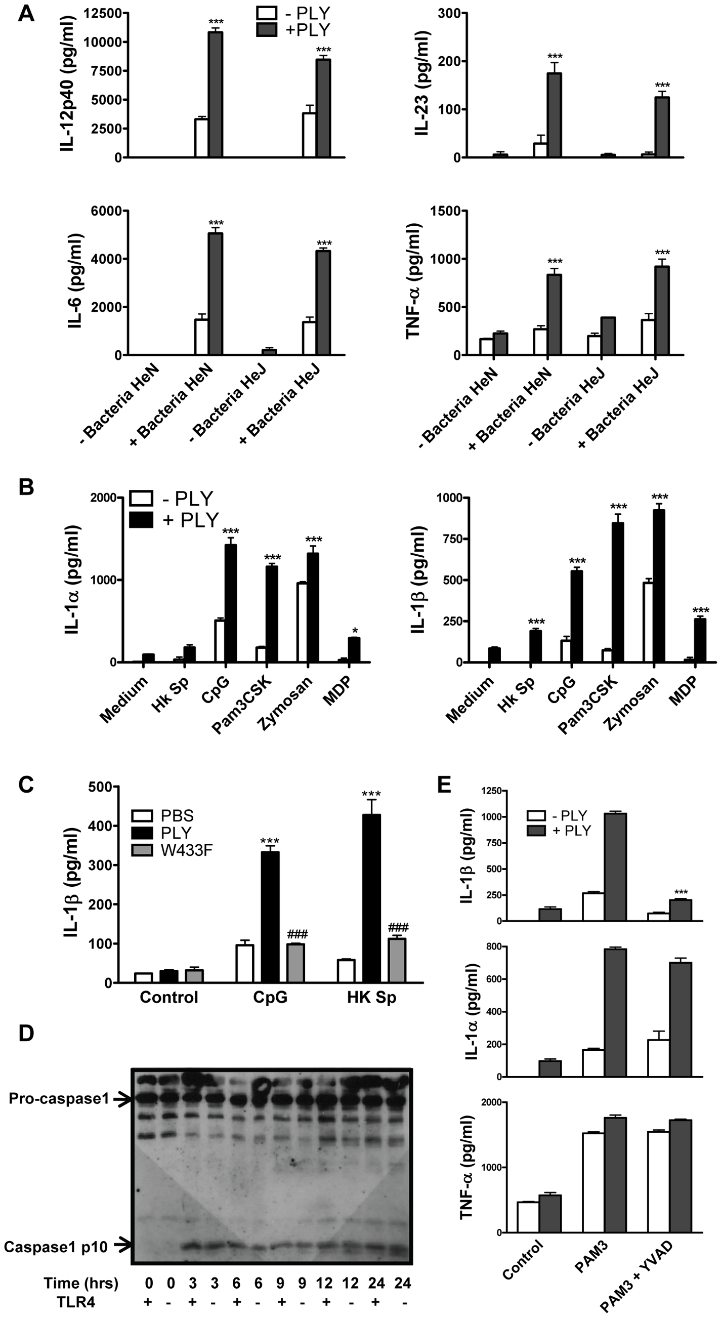 PLY synergizes with TLR agonists to enhance pro-inflammatory cytokine secretion by DC.