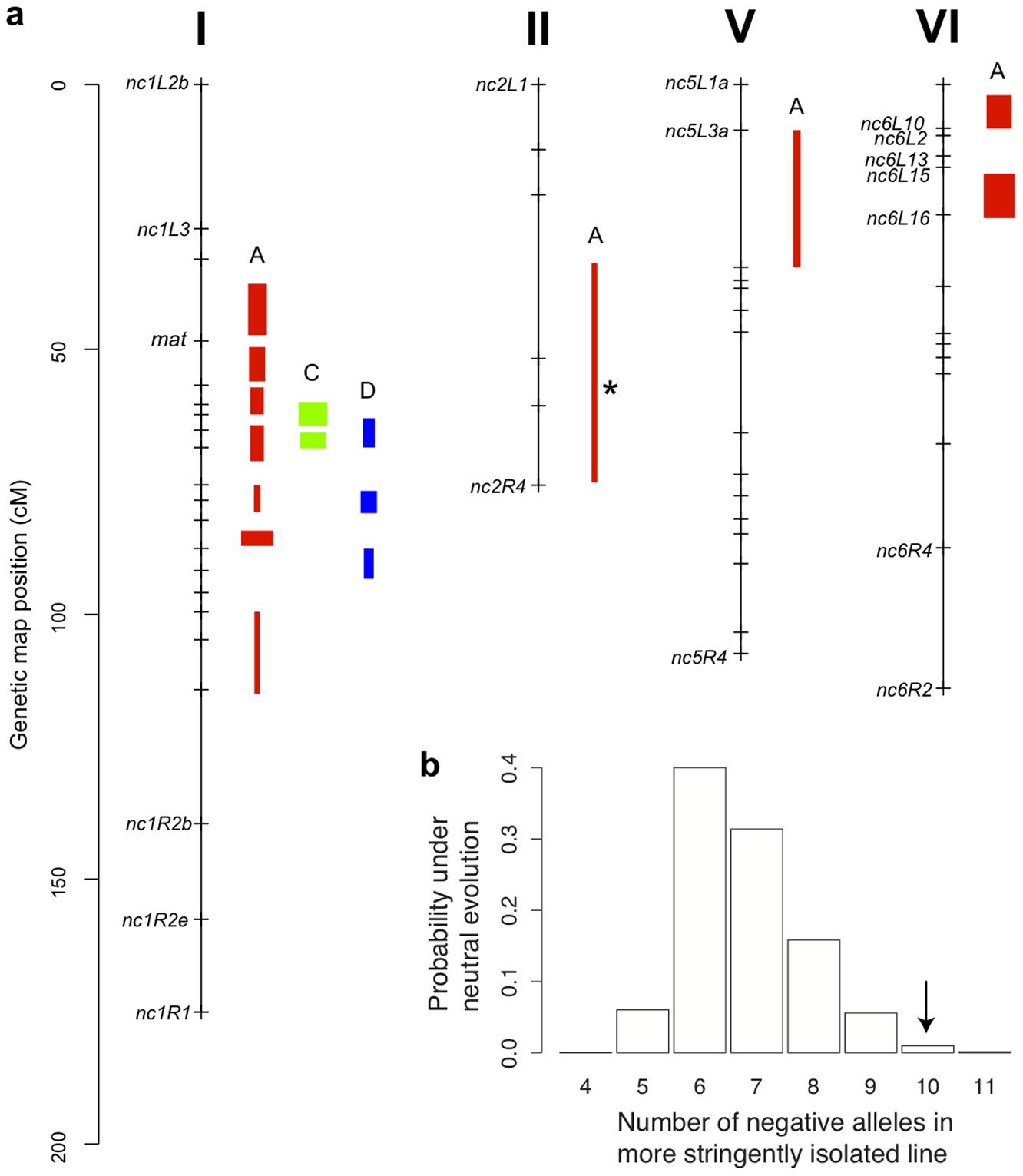 Genetics of hybrid fruitbody development in <i>N. crassa</i>.