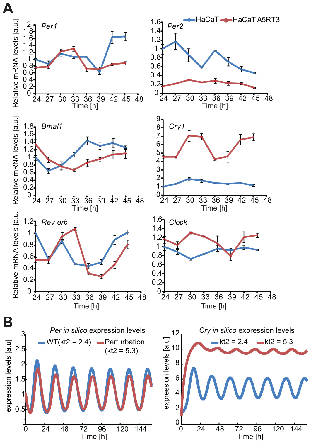 Differential gene expression of core clock genes in normal- and H-Ras-transformed human keratinocytes.