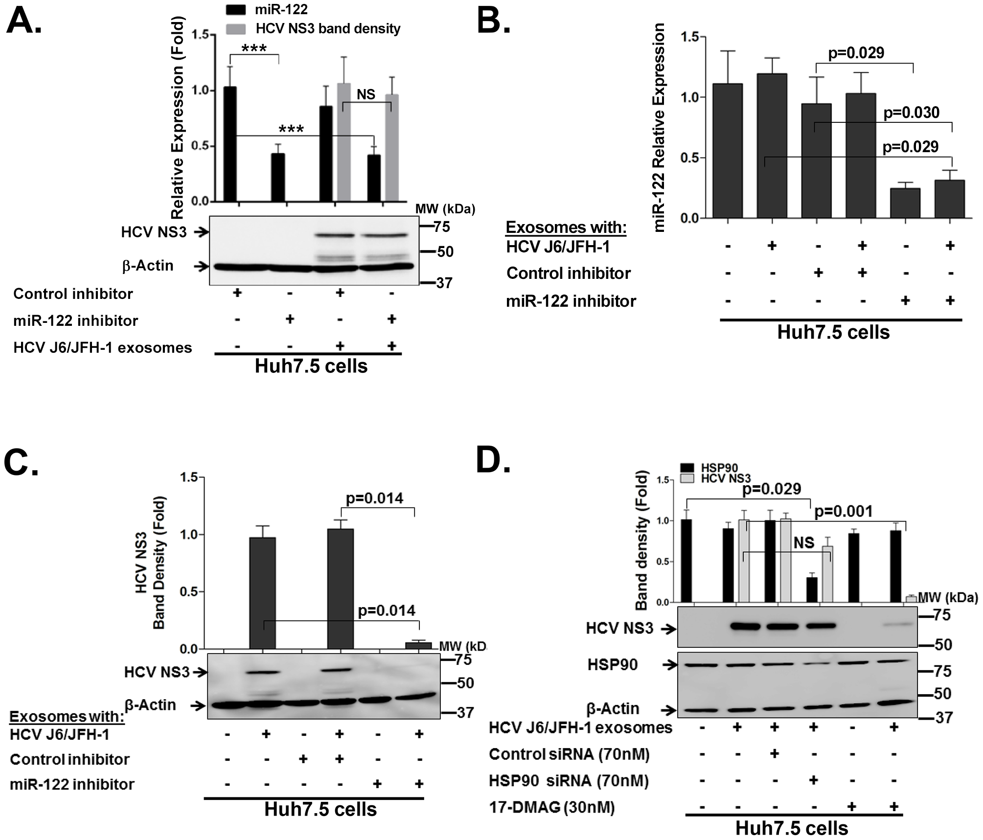 HCV transmission by exosomes can be blocked by miR-122 or HSP90 functional inhibition within exosomes.