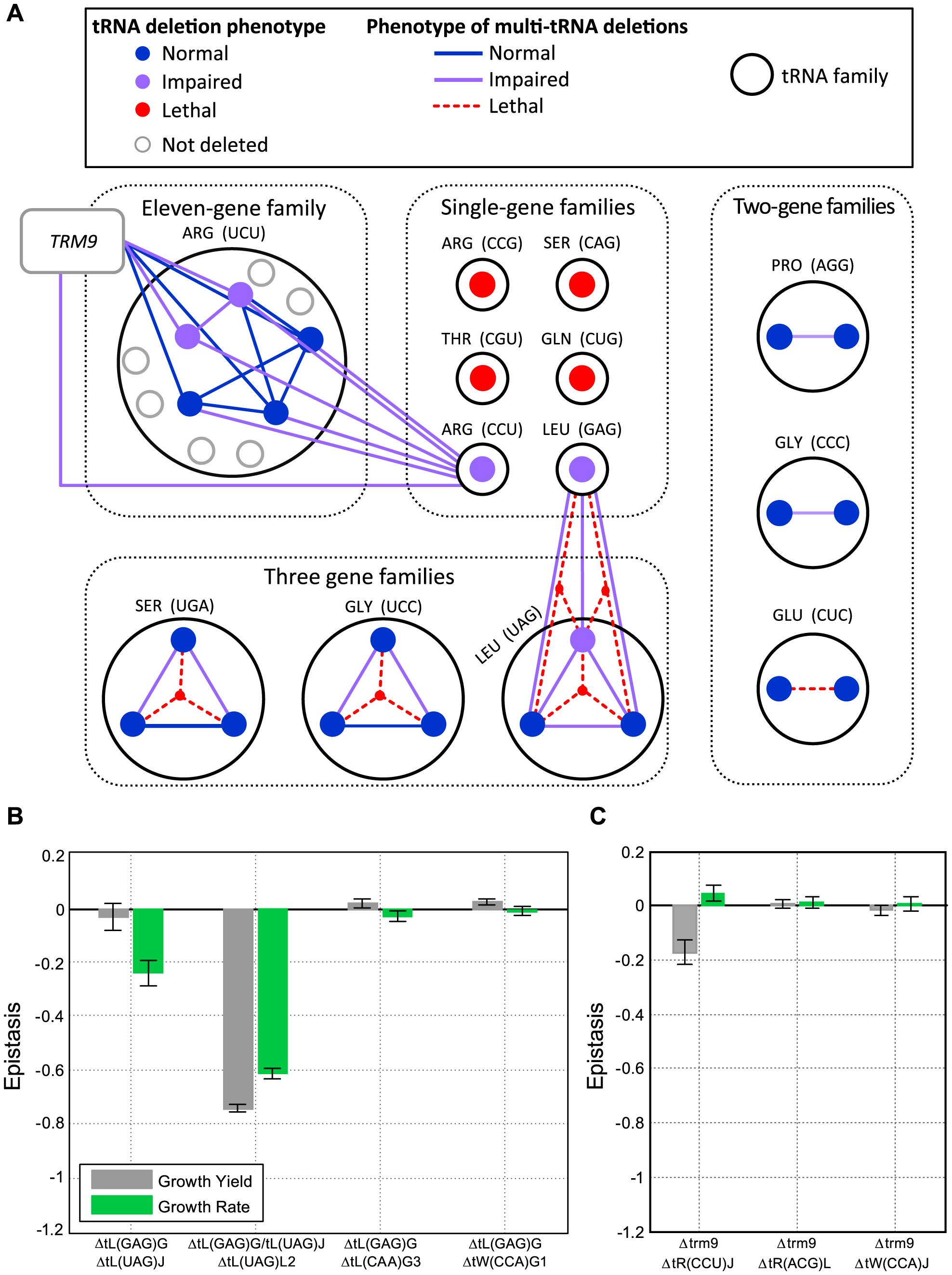 Extensive redundancy underlies robustness to tRNA gene deletion.