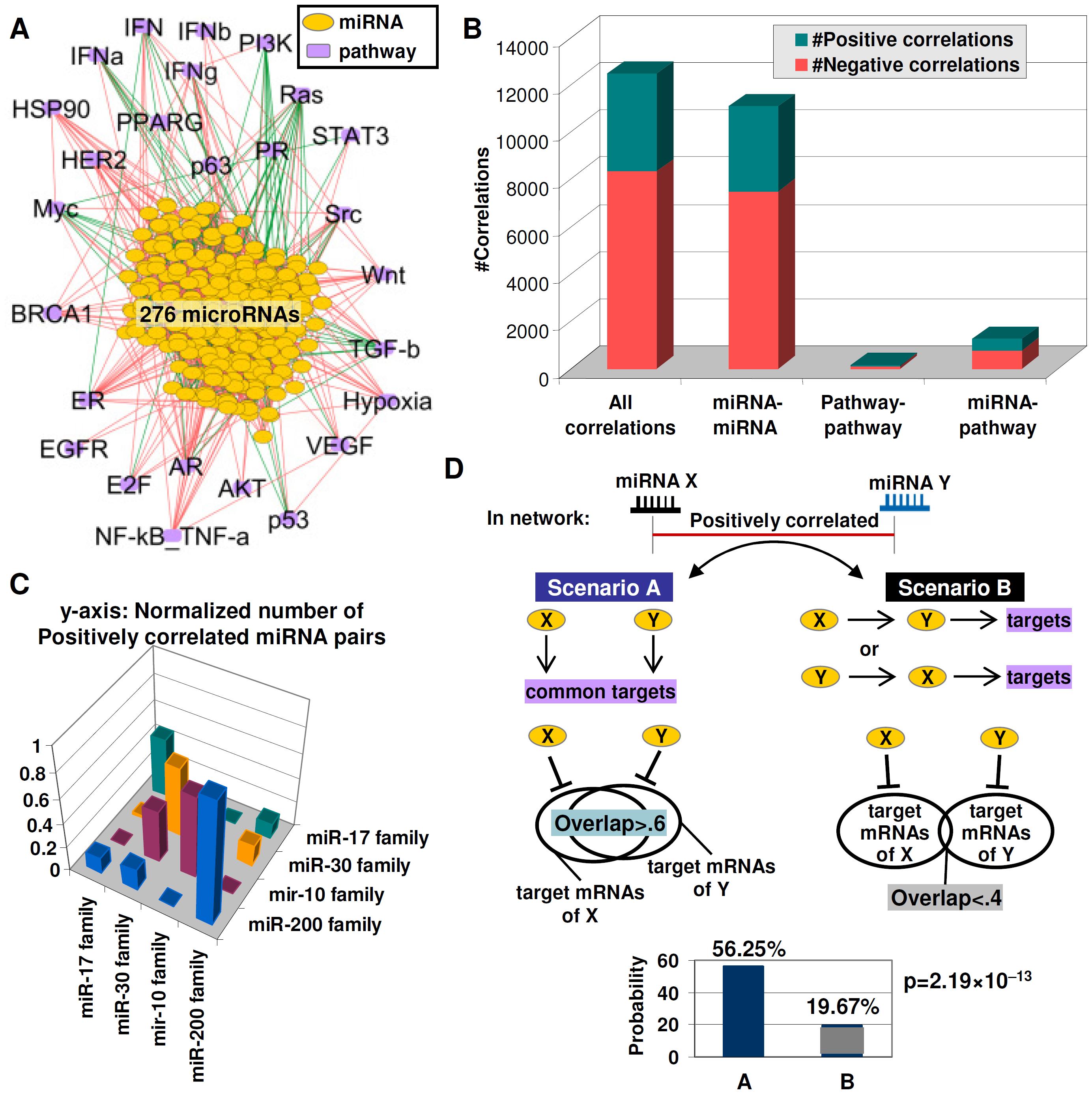 Functional redundancy in the miRNA–pathway network.
