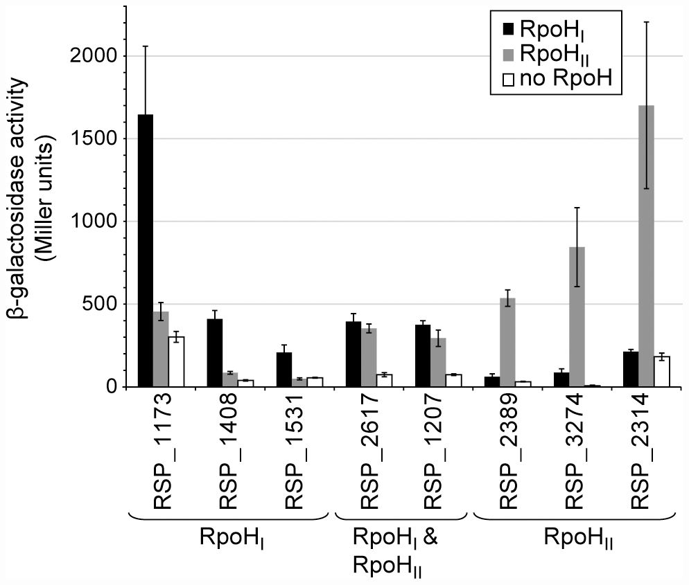 Relative activities of selected RpoH<sub>I</sub>- and RpoH<sub>II</sub>-dependent promoters.