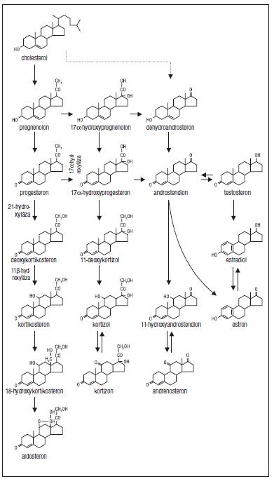 Schéma 1. Schéma steroidogeneze.