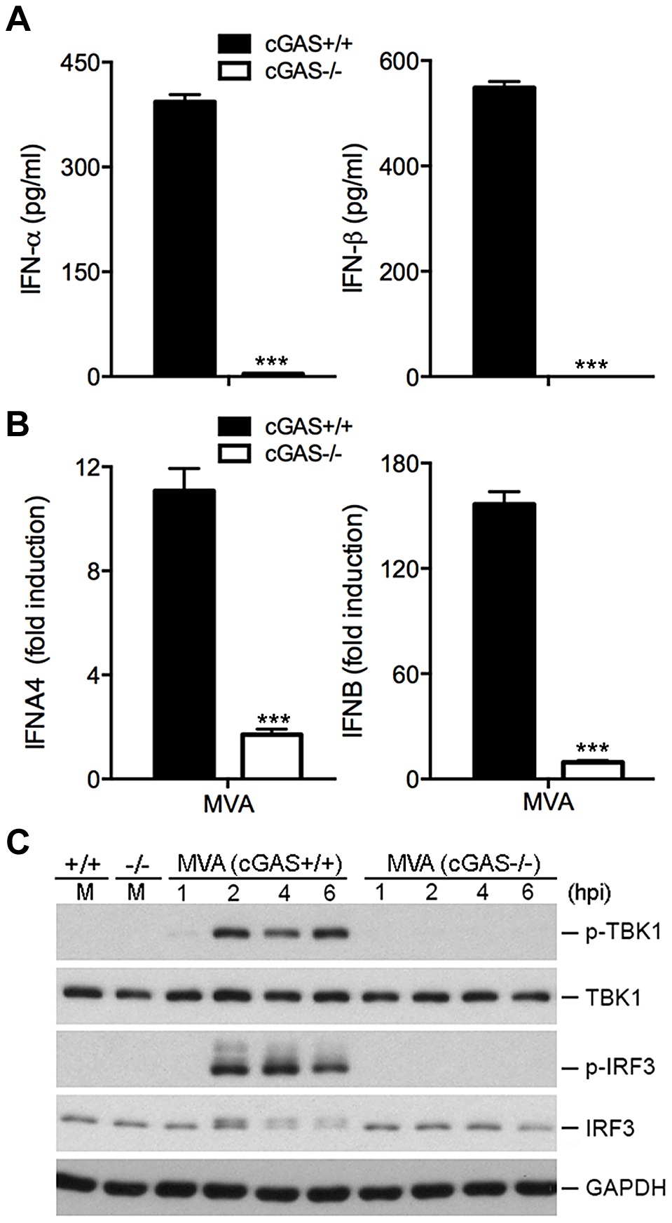 cGAS is the critical cytosolic DNA sensor for MVA infection of cDCs.