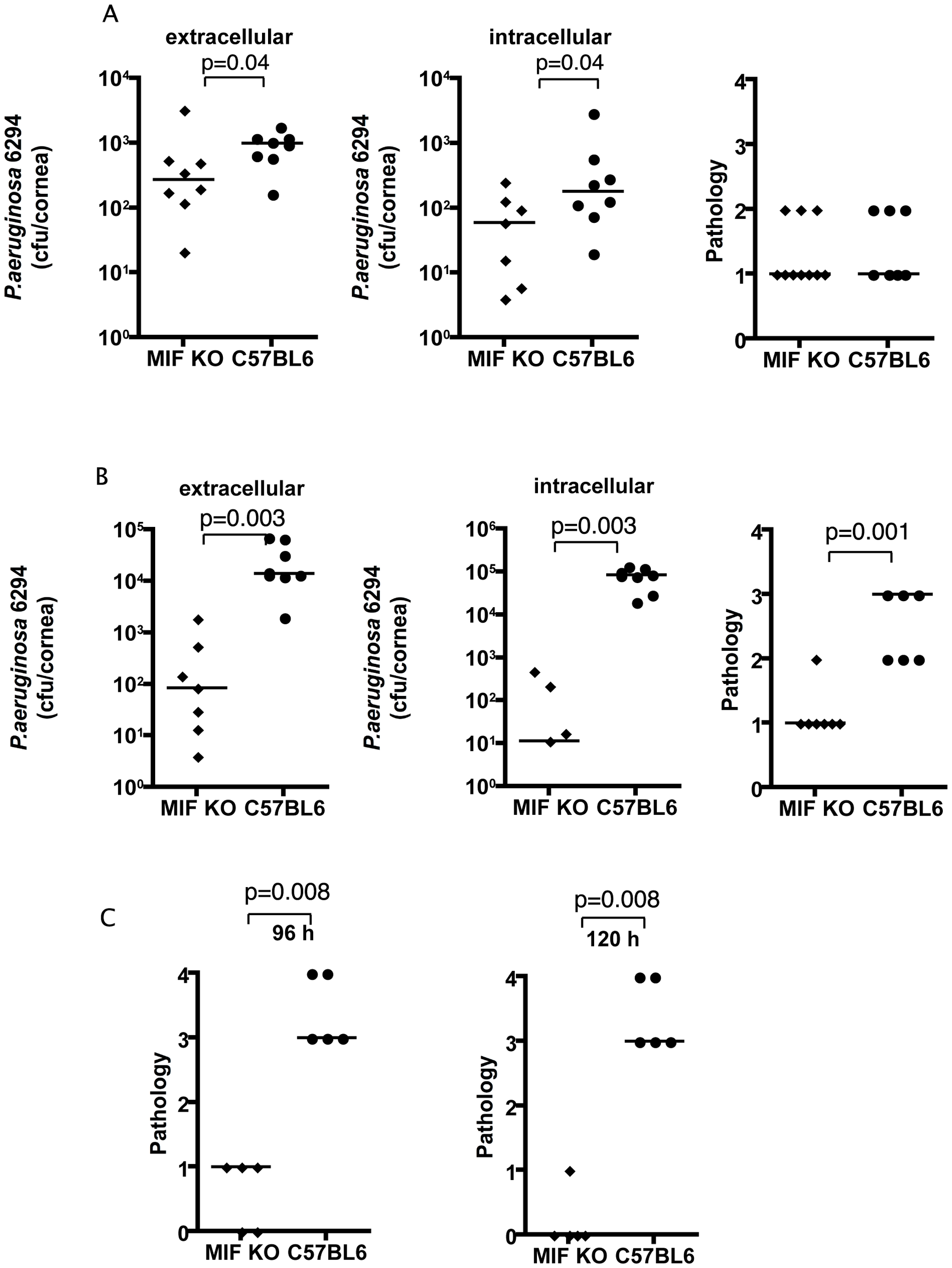 MIF KO mice are protected from <i>P. aeruginosa</i>-induced infection.