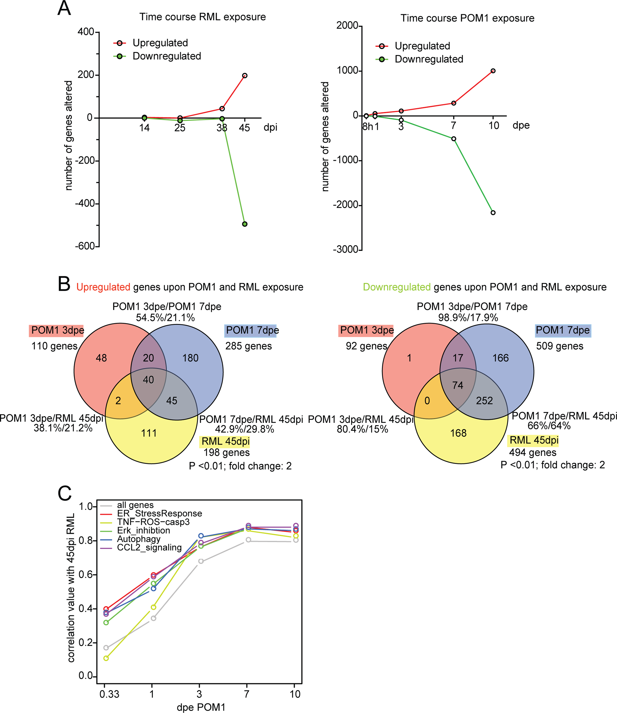 The transcriptome of RML-infected and POM1-treated COCS.
