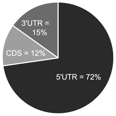 Majority of miR-US25-1 target sites reside within 5′UTRs.