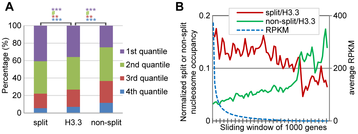 H3.3 nucleosome splitting events are better markers for active transcription than H3.3 nucleosome occupancy.