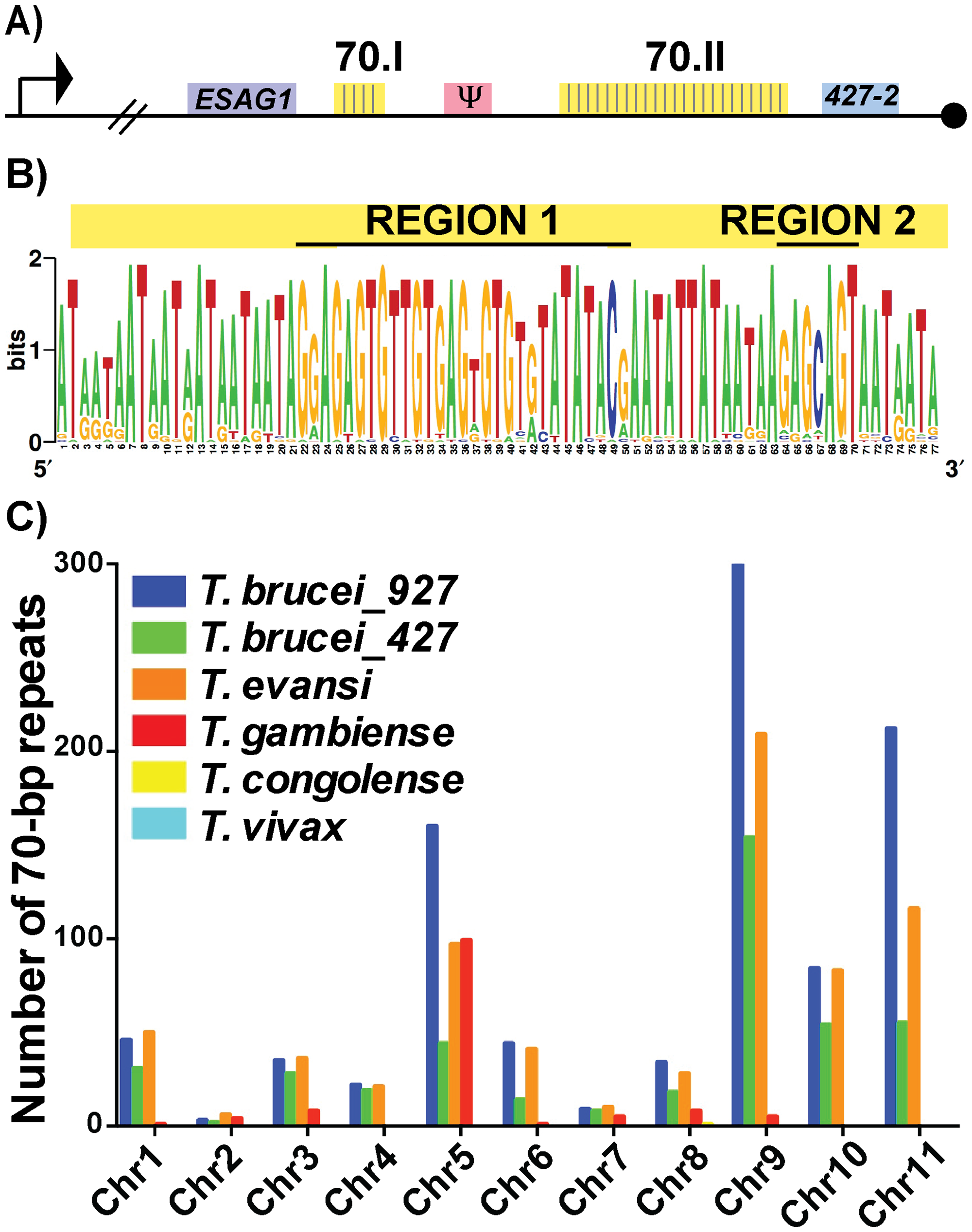 Conservation and genomic distribution of the 70-bp repeat sequence.