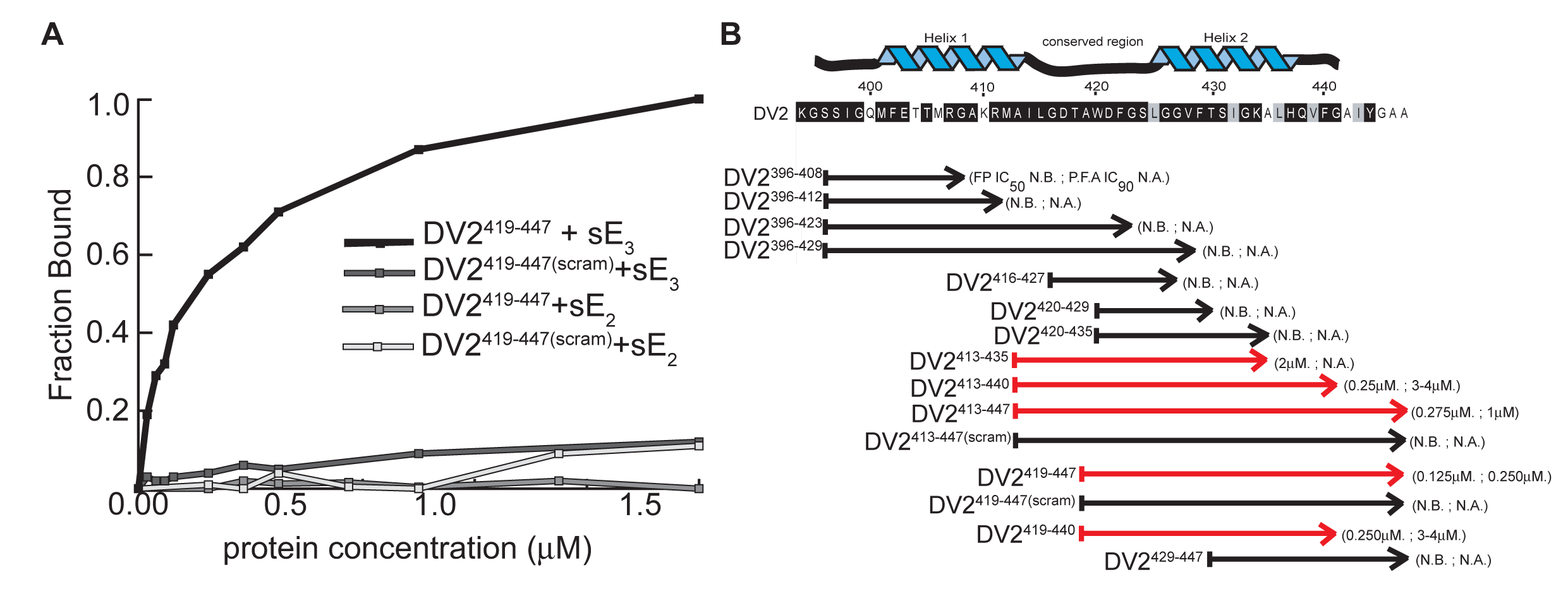 Binding and affinities of stem-derived peptides with DV2 sE(1–395) and inhibition of DV2 infectivity.