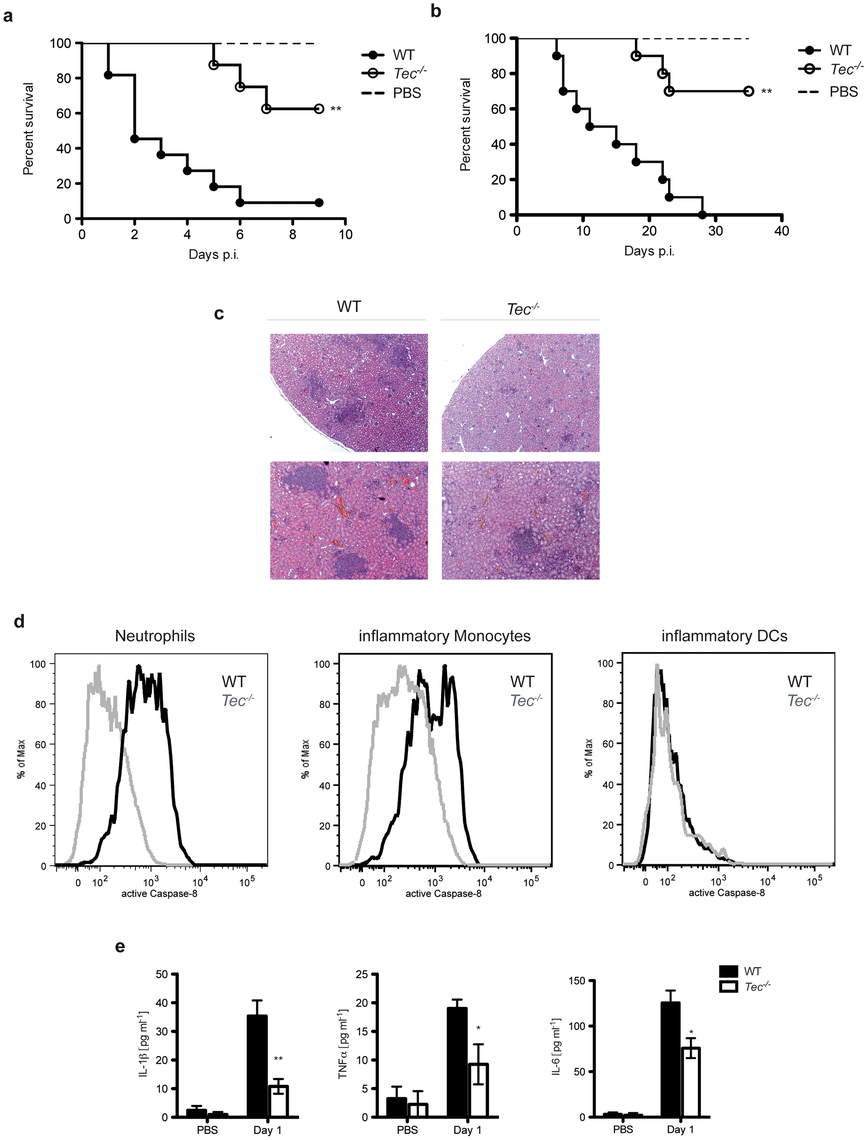 Tec-deficient mice are highly resistant to candidiasis.