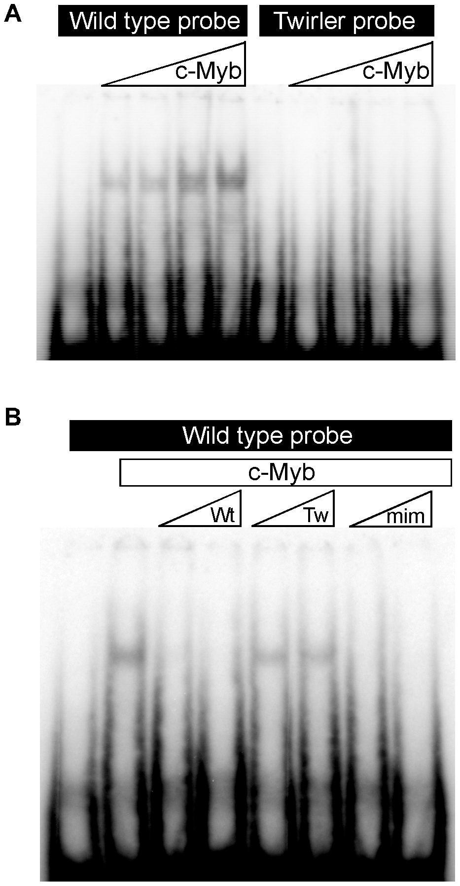 Electrophoretic mobility shift assay of Twirler DNA and C-Myb.