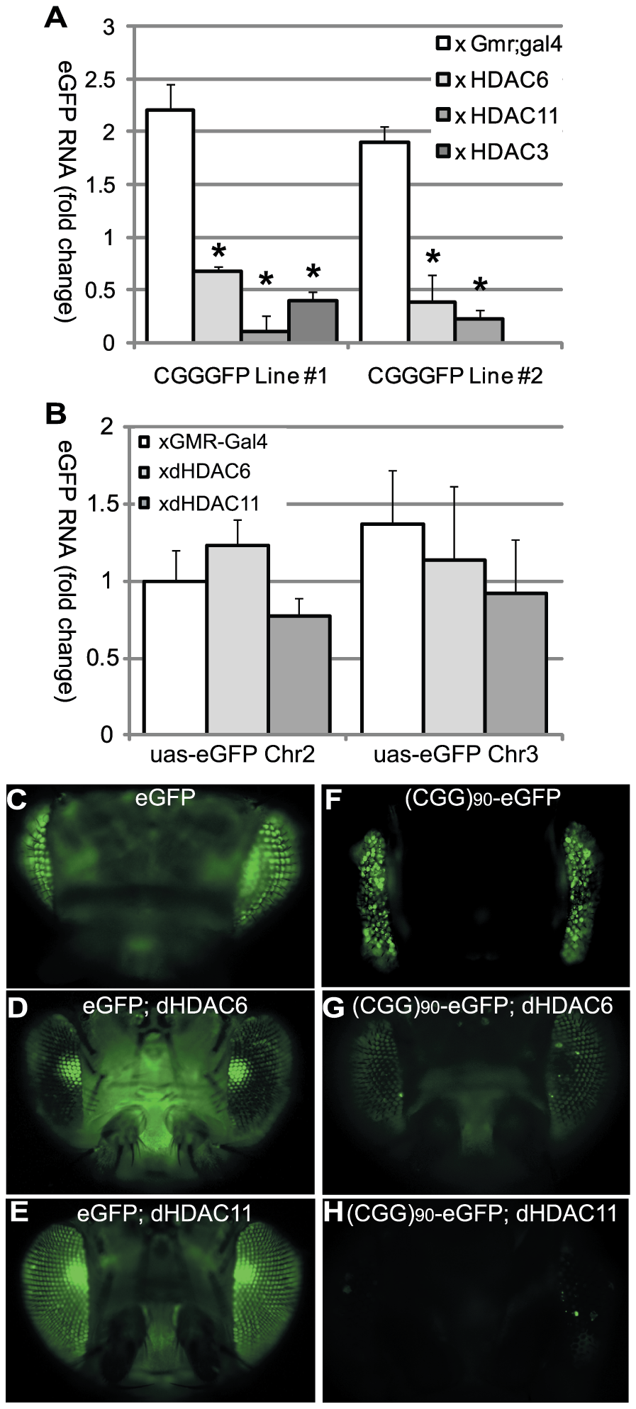 HDAC over-expression suppresses the accumulation of (CGG)<sub>90</sub>-eGFP mRNA.