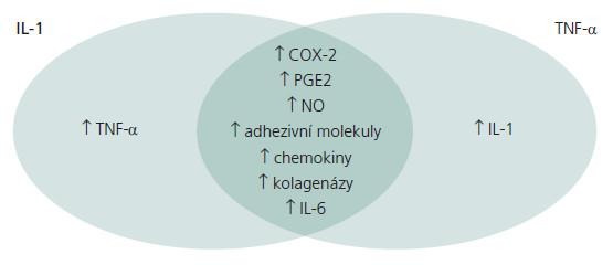 Schéma 3. Schéma komplexního vlivu IL-1 a TNF-α na produkci dalších mediátorů zánětu.