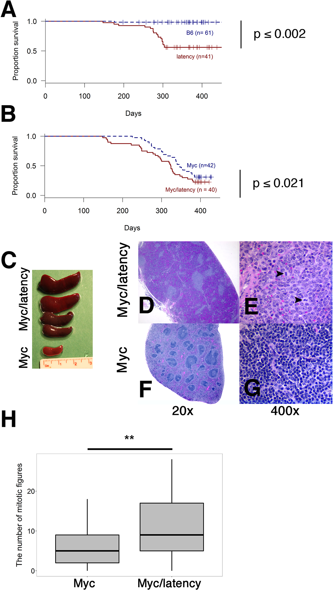 Augmented tumorigenicity by cooperation of KSHV latency locus and Myc.