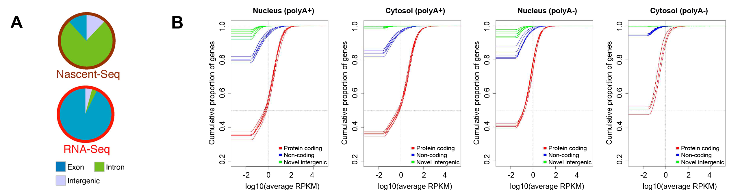 Levels of protein-coding and intergenic RNAs in mammalian cells.