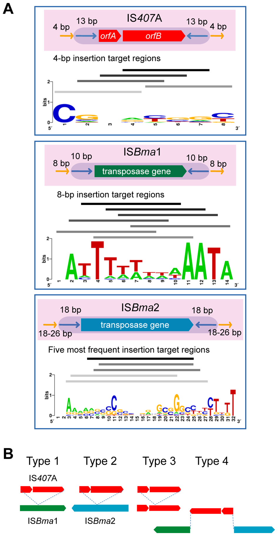 The main IS elements and their insertion target sequences.