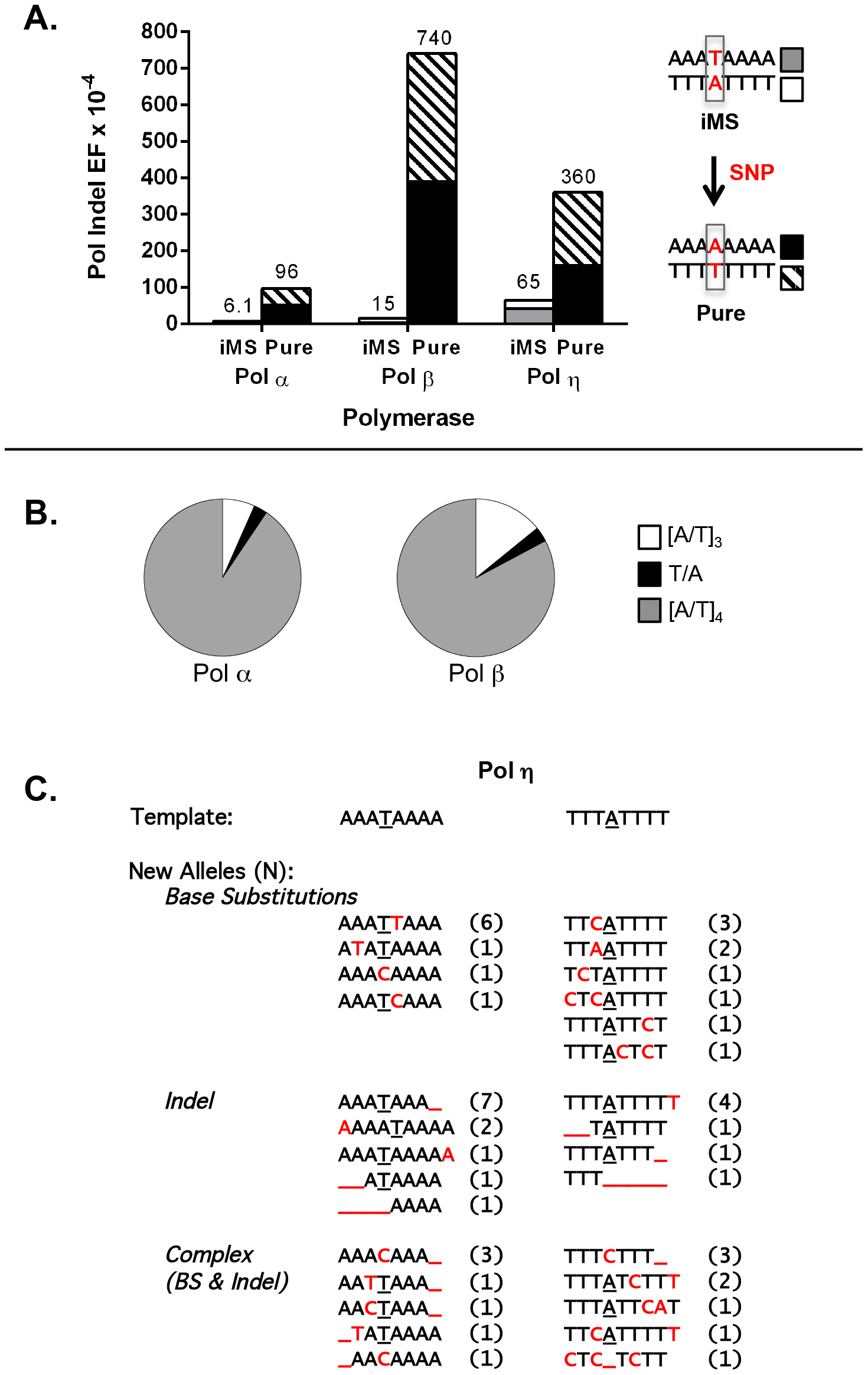 DNA polymerase error rates at interrupted microsatellites corresponding to sequences within the <i>APC</i> gene.