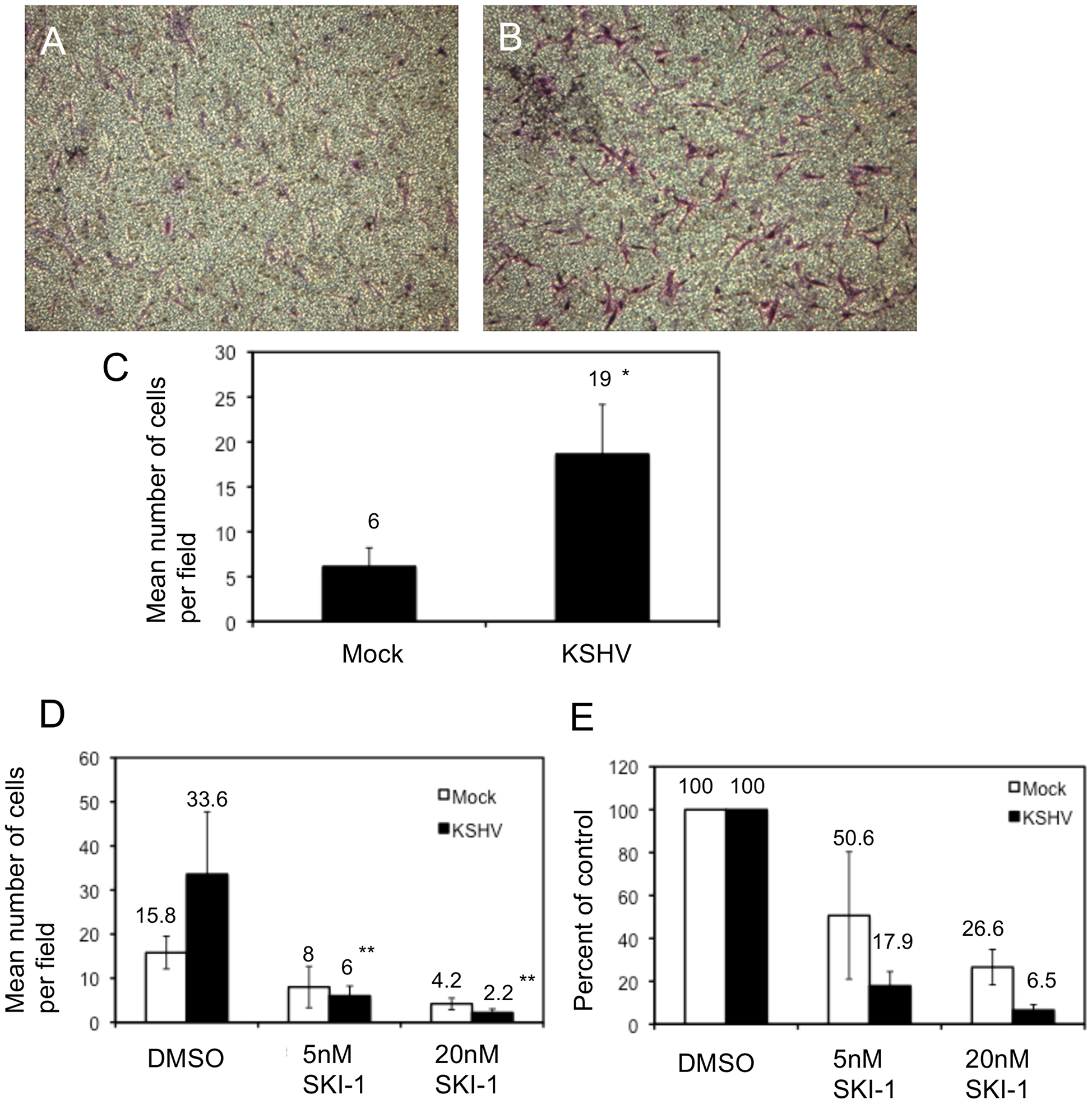 KSHV latent infection promotes endothelial cell transwell migration in a Src-dependent fashion.