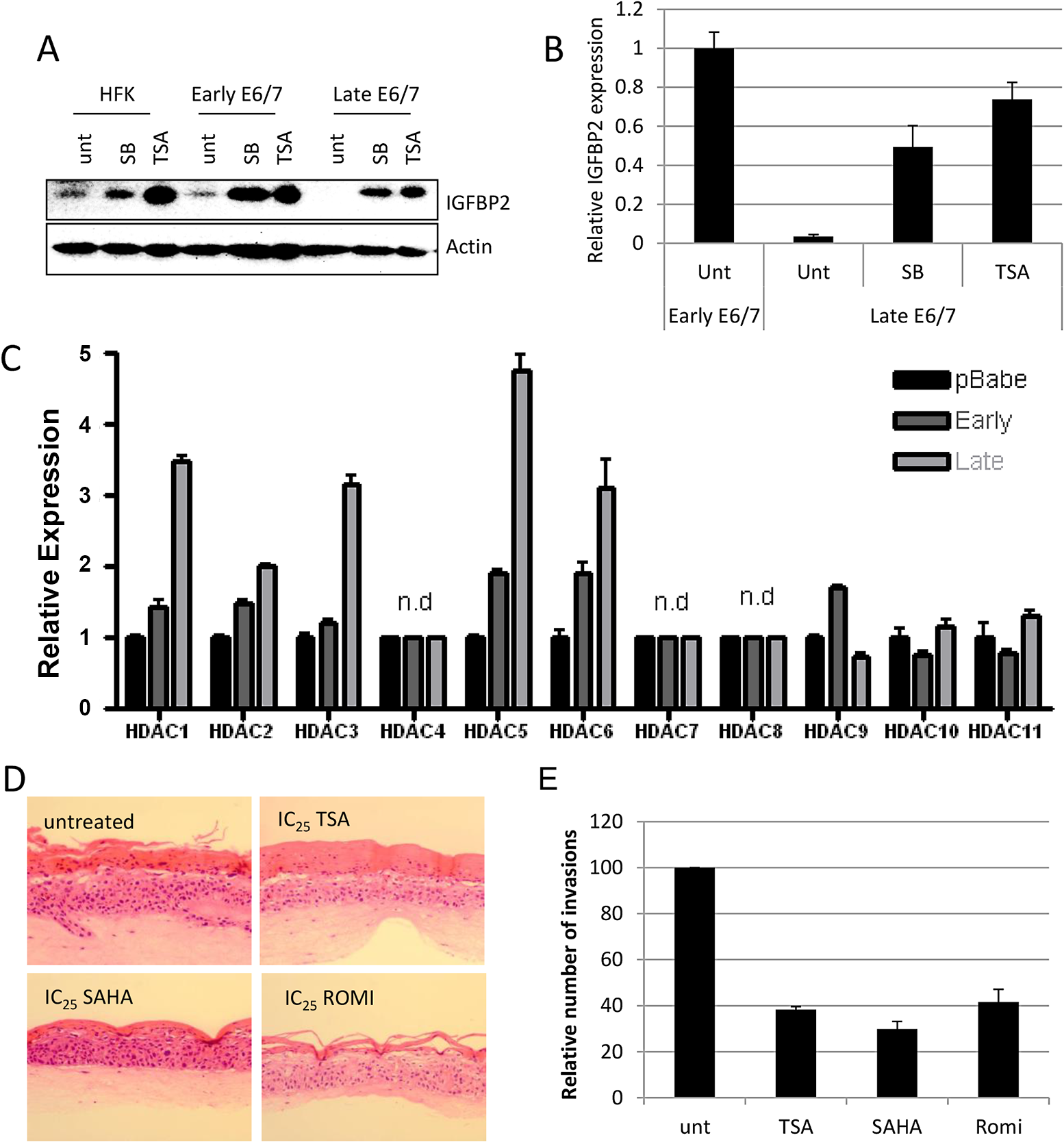 IGFBP2 expression is repressed through enhanced HDAC function.