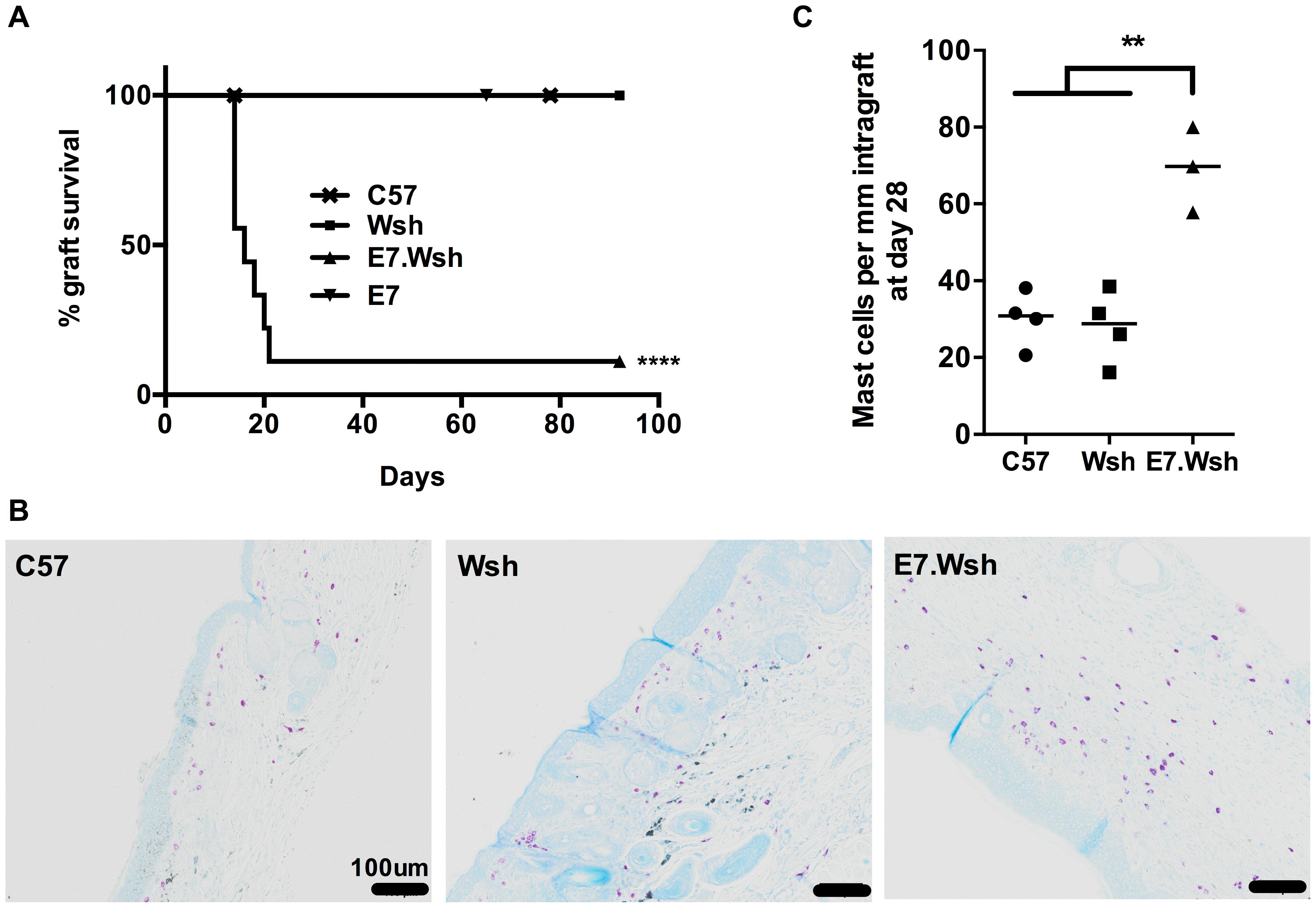 MCs are immunosuppressive in E7 environment.