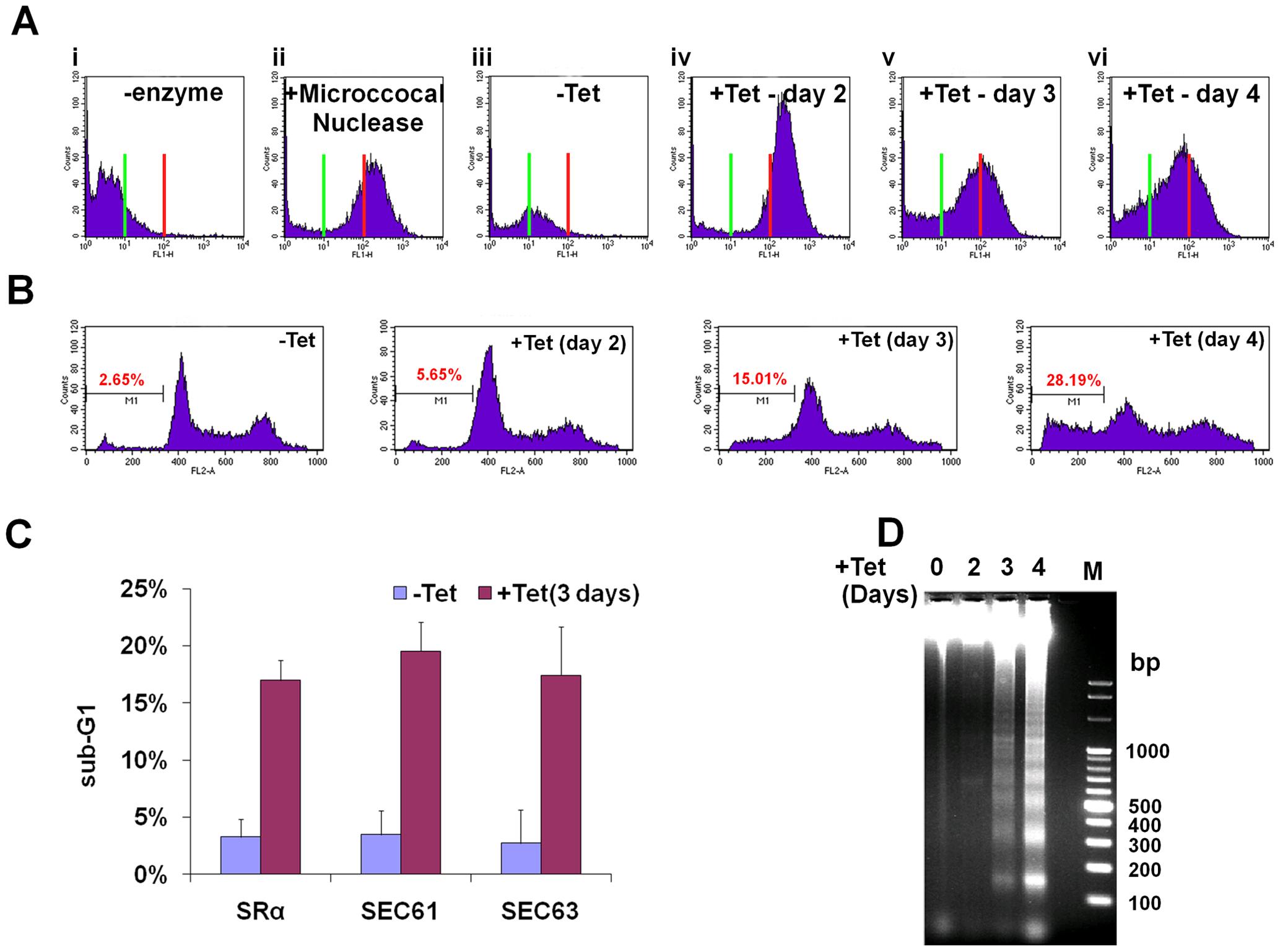SLS elicits DNA fragmentation.