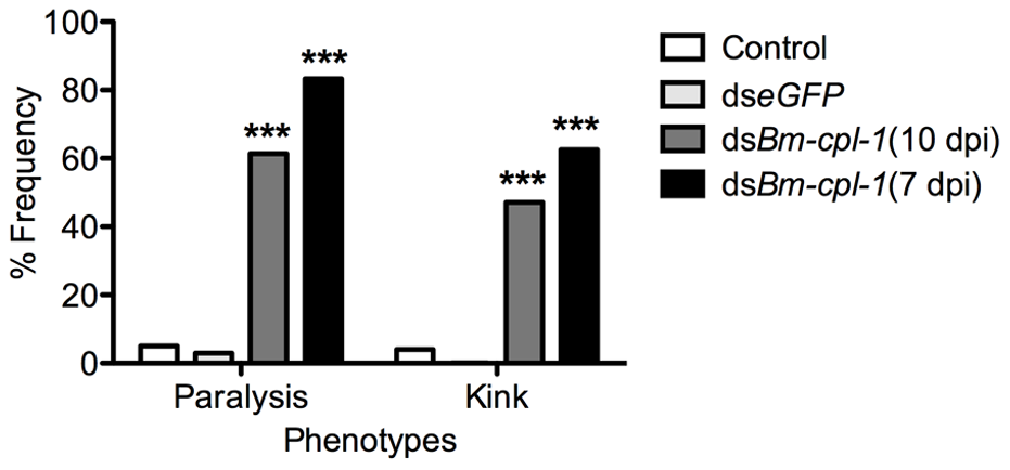 The frequency of caudal paralysis and kinked posture of dsRNA <i>Bm-cpl-1</i>-exposed <i>B. malayi</i>.