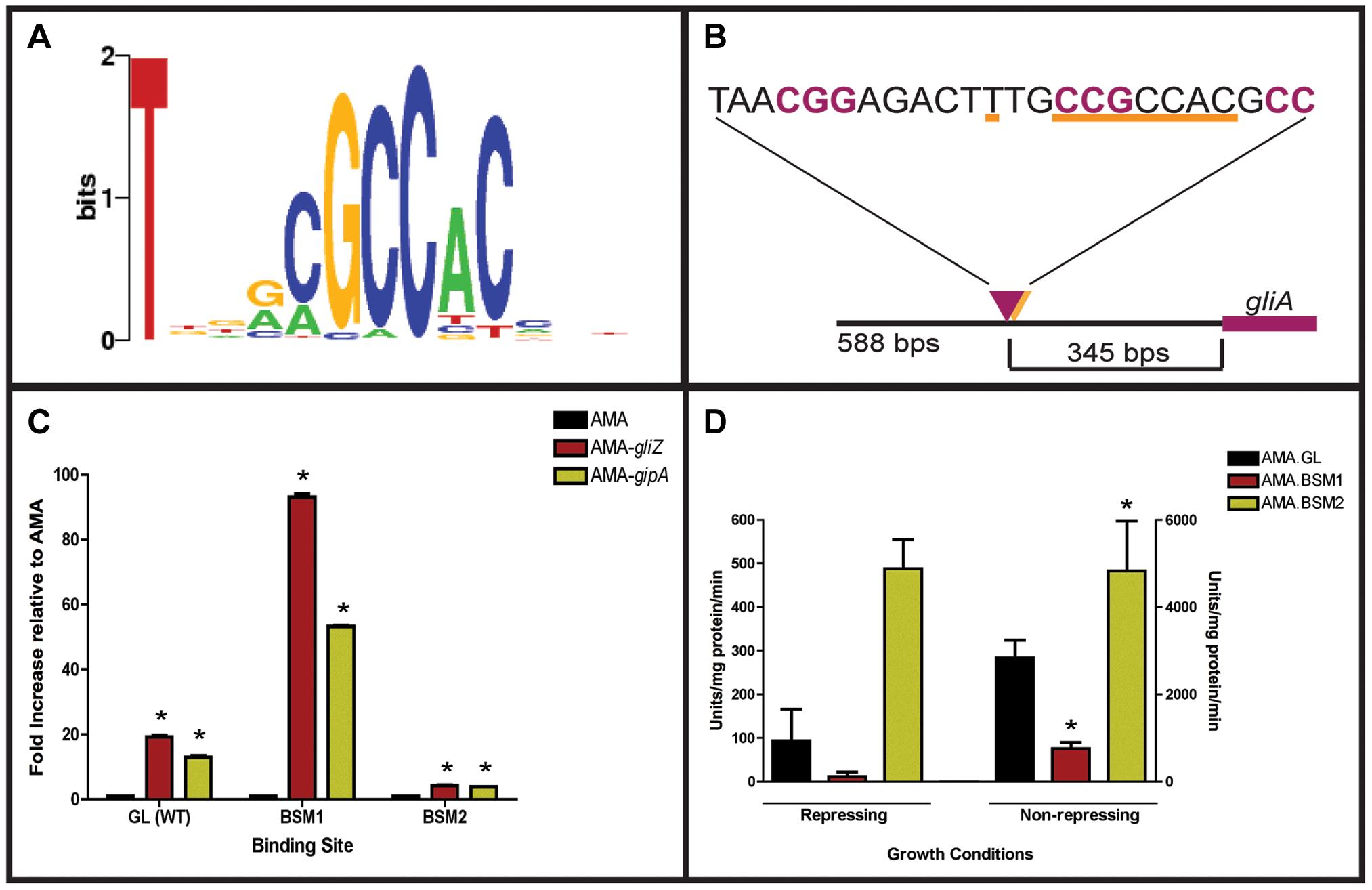 Characterization of the putative GipA DNA binding site.