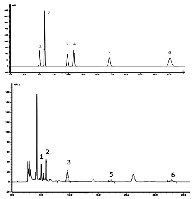 HPLC-UV/VIS chromatograms of representative samples: above – standards, below – extract 6 (cultivated on millet) of C. sinensis