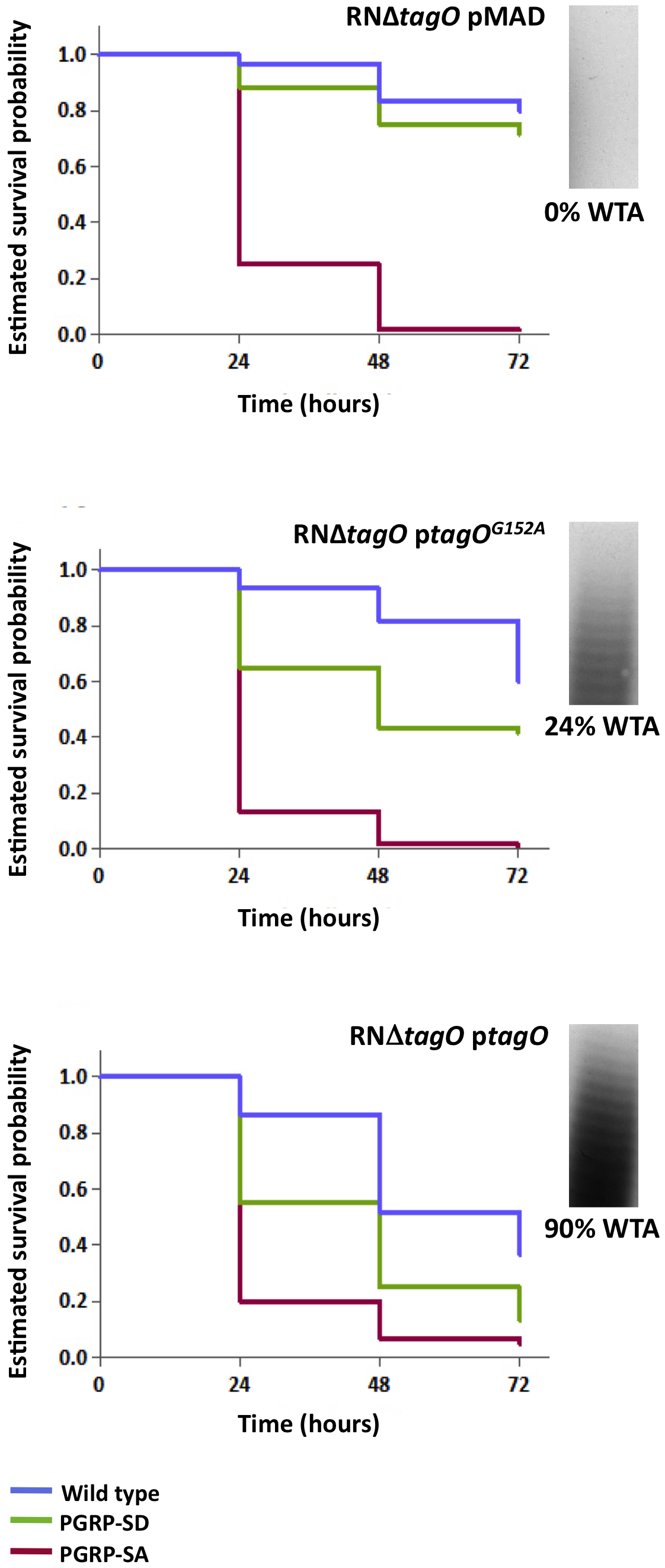 The levels of WTA modulate the requirement for PRRs.