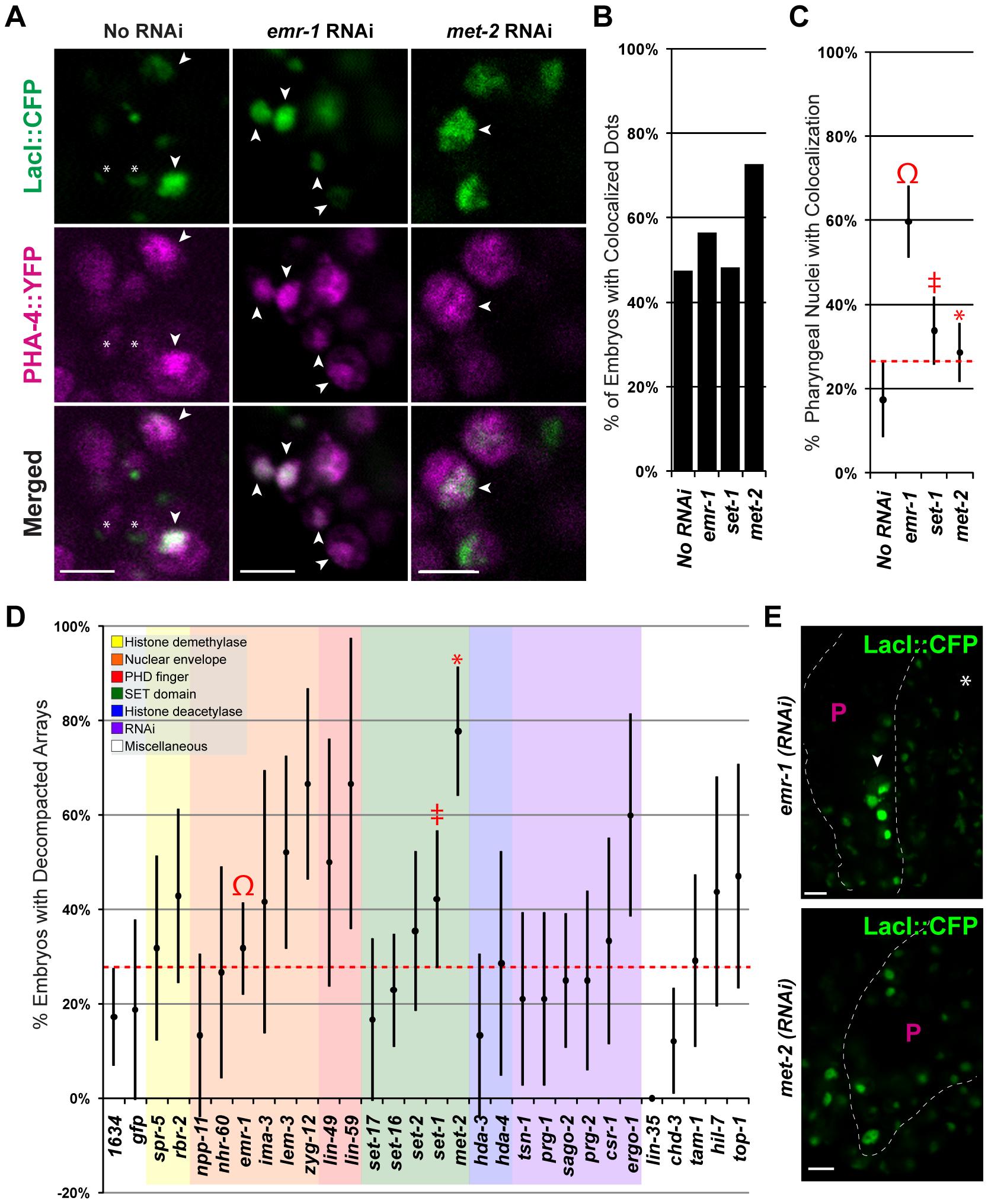 Emerin inhibits PHA-4 binding in the pharynx.