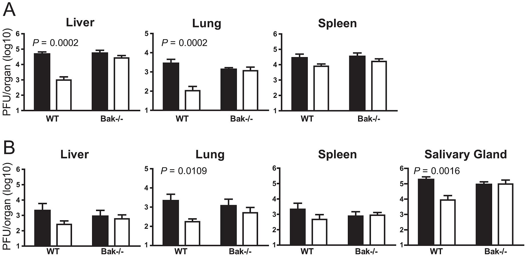 m41.1 inhibits Bak <i>in vivo</i>.