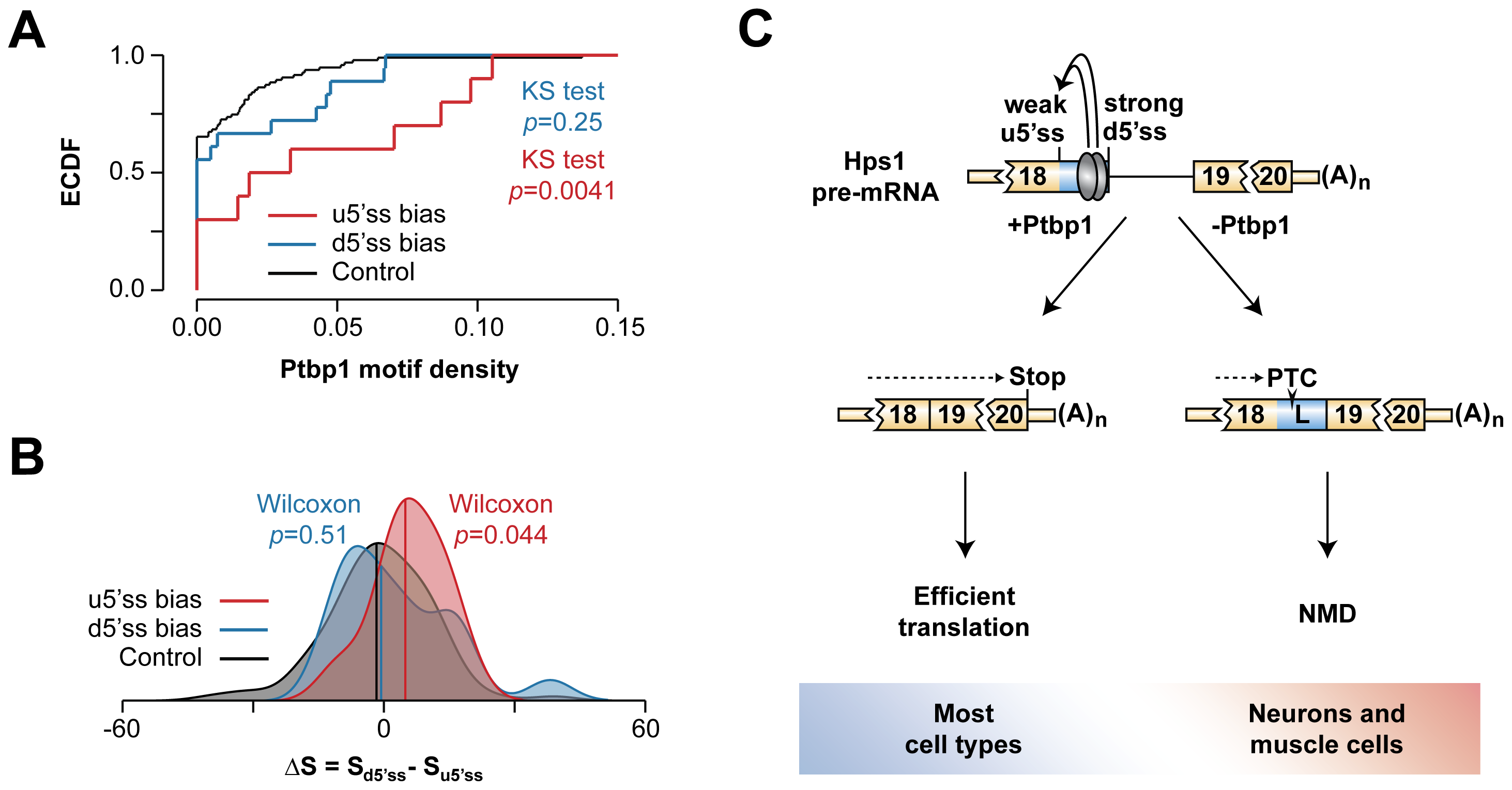 Hps1-like A5C regulation may recur in other genes.