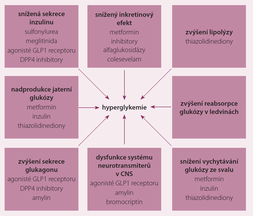 Patofyziologie hyperglykemie (DeFronzův oktet).