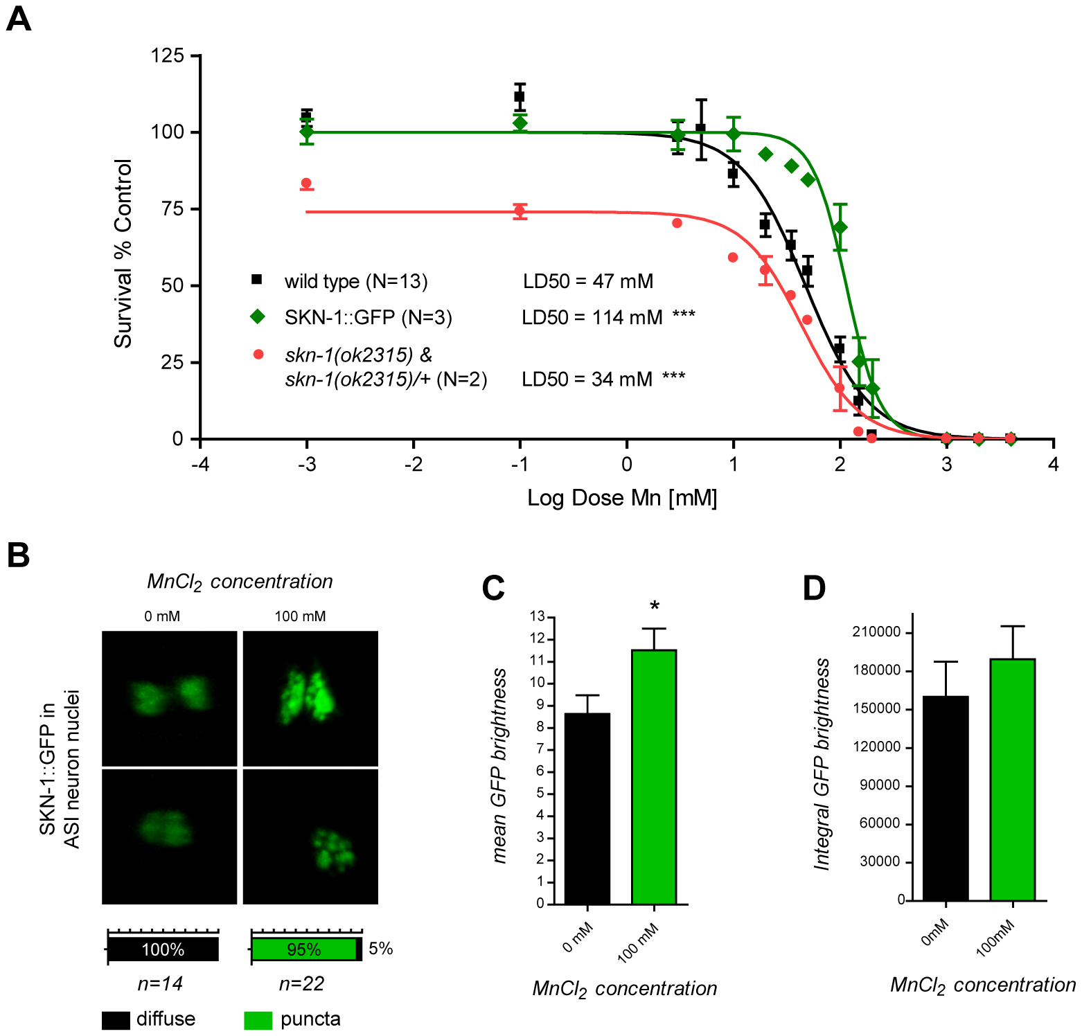skn-1 mutants are hypersensitive while SKN-1::GFP overexpressing worms are hyper-resistant to Mn toxicity and respond to Mn exposure by relocalizing SKN-1::GFP to nuclear puncta in ASI neurons.