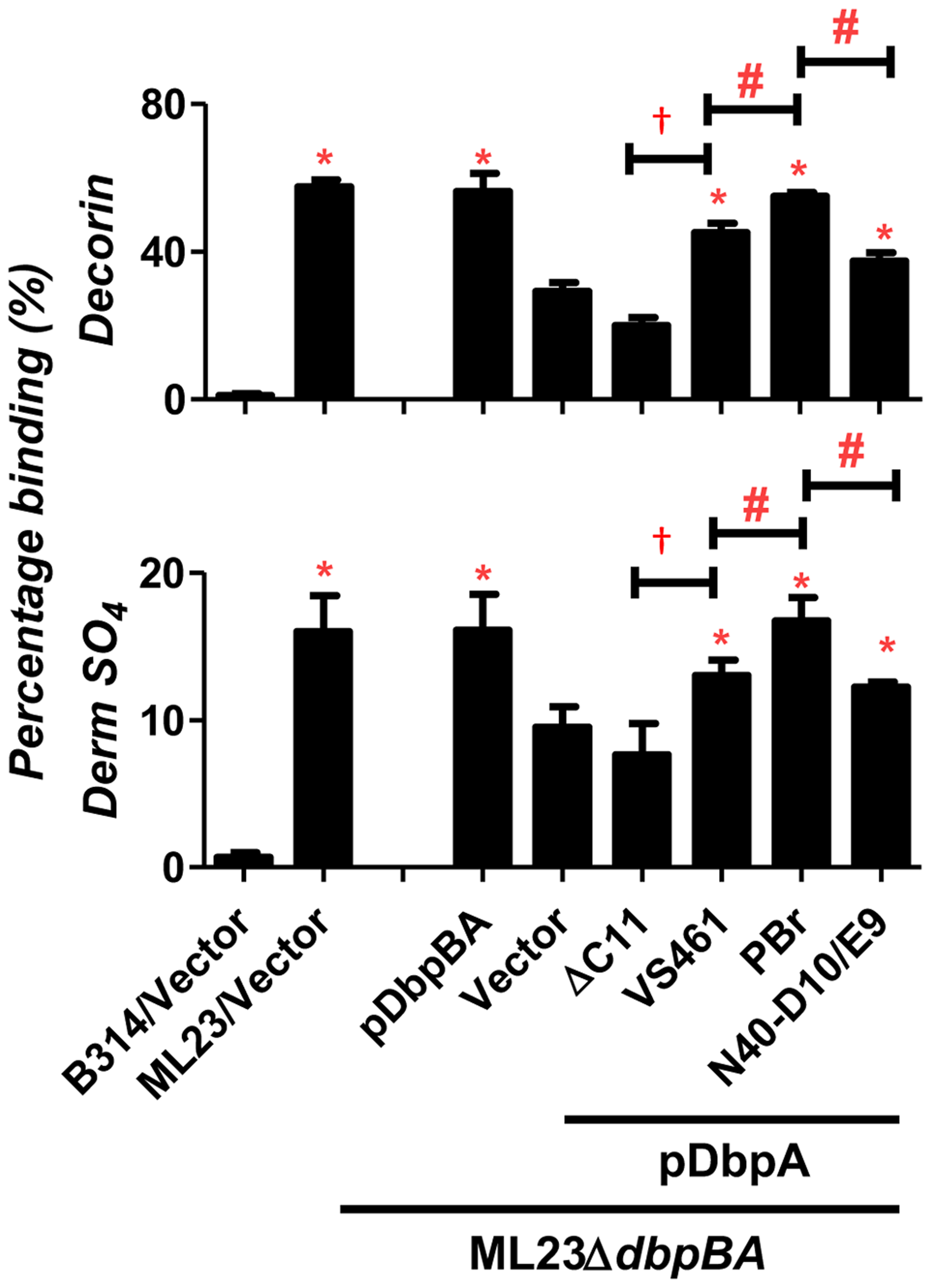 DbpA variants produced in <i>B. burgdorferi</i> promote distinct binding activities to decorin and dermatan sulfate.