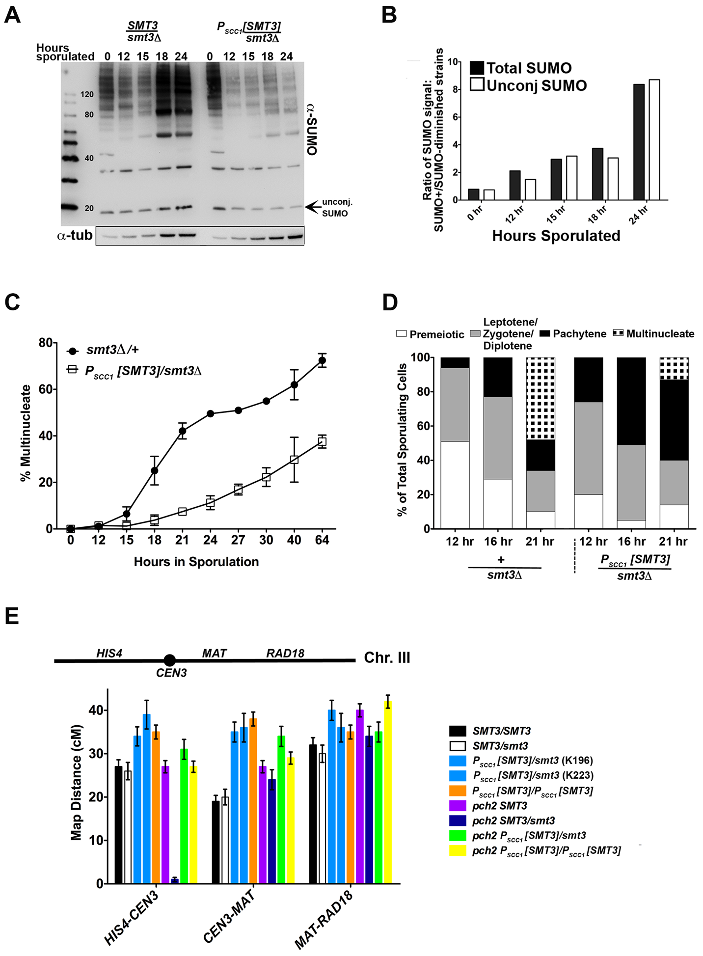 SUMO-diminished strains exhibit reduced sporulation and elevated crossover levels.