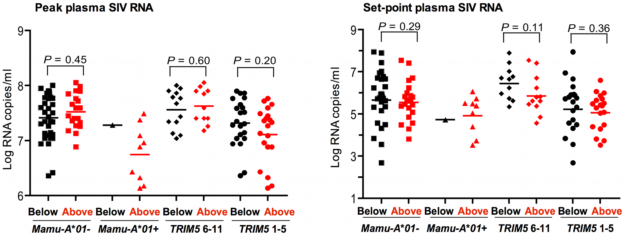 Lack of association of <i>CCL3L</i> CNV with virus replication in Indian-origin rhesus monkeys following SIVmac251 infection.