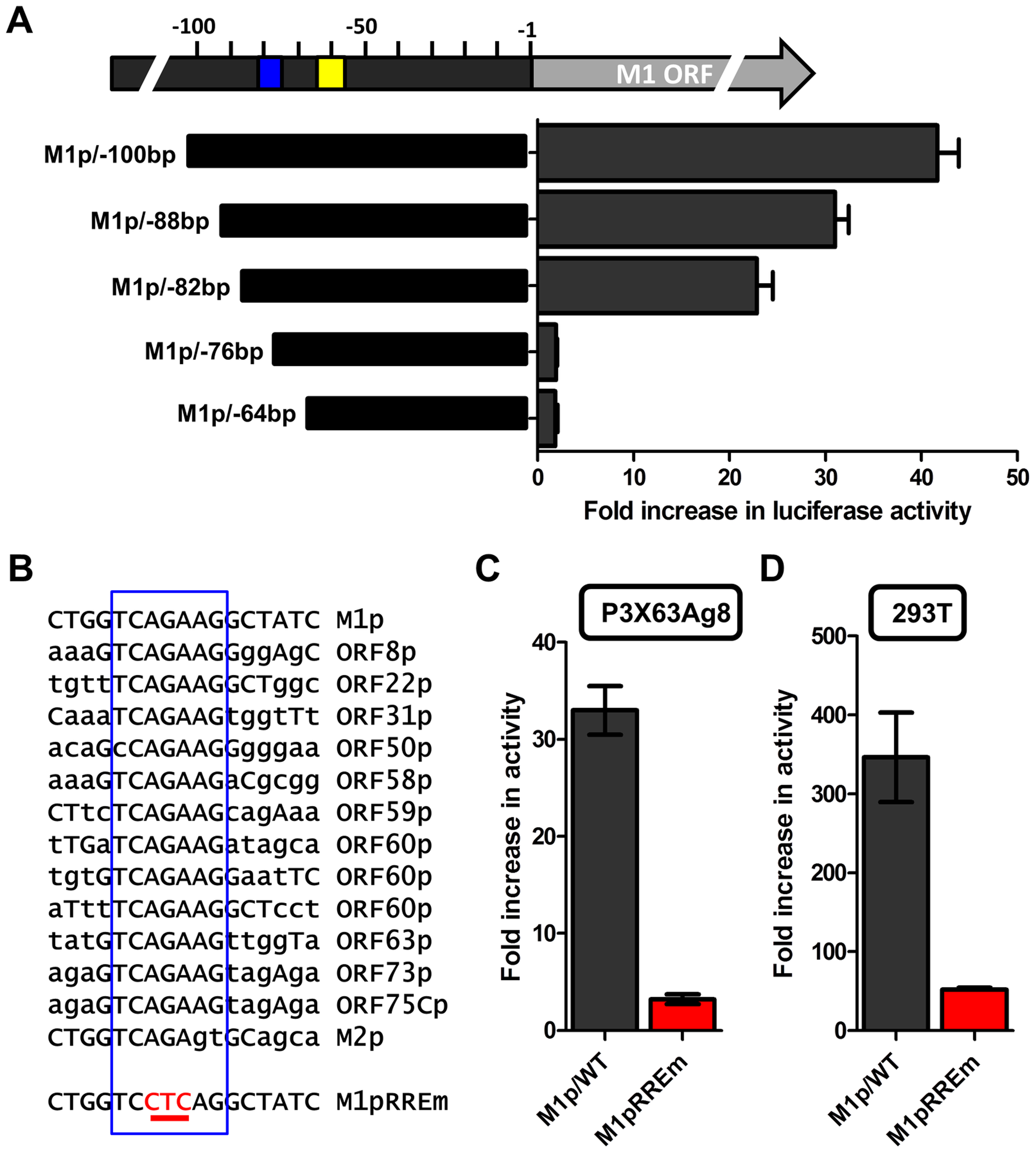Identification of a novel RTA response element in the M1 promoter.