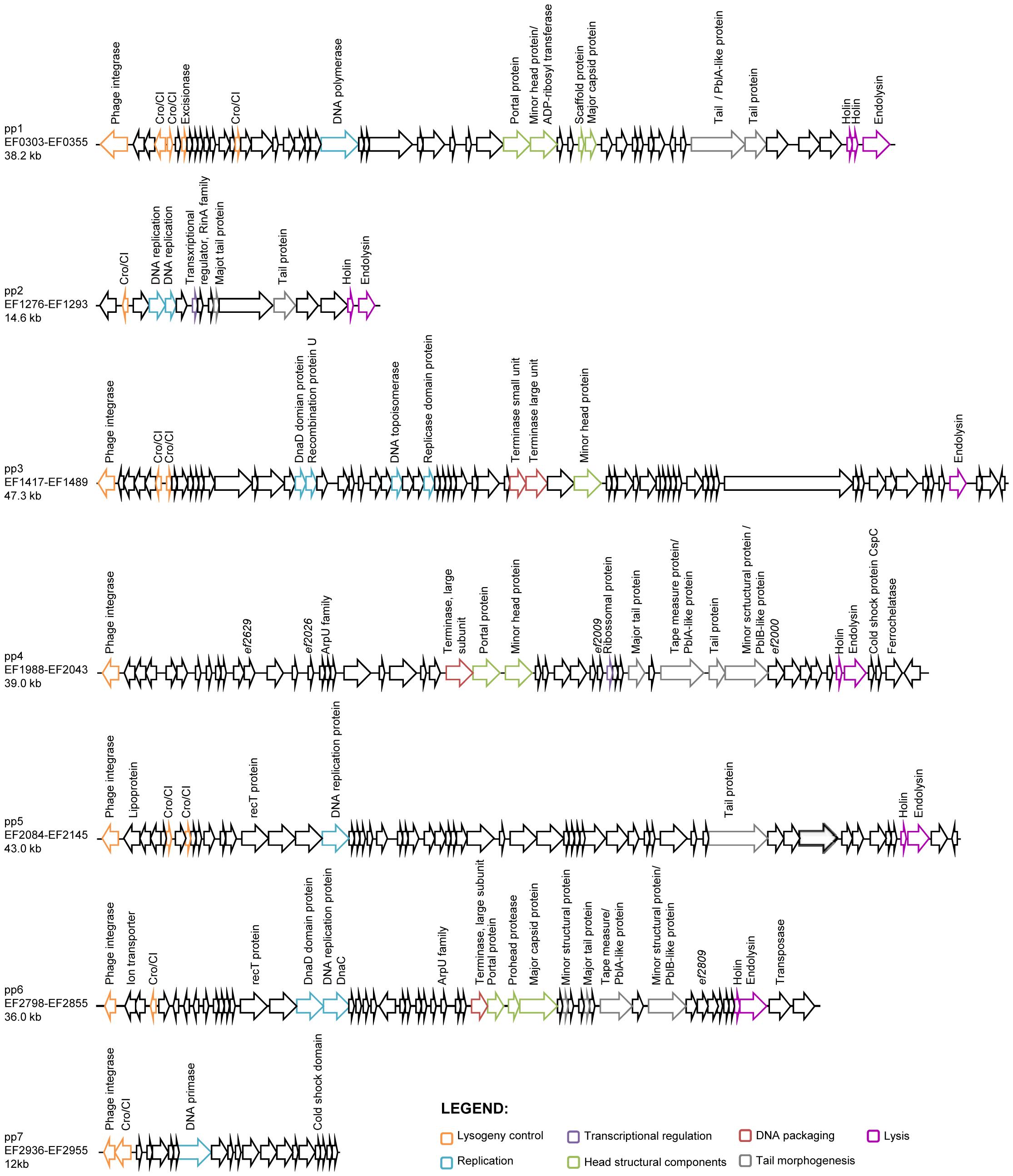 Genomic organization of <i>E. faecalis</i> V583 prophages.
