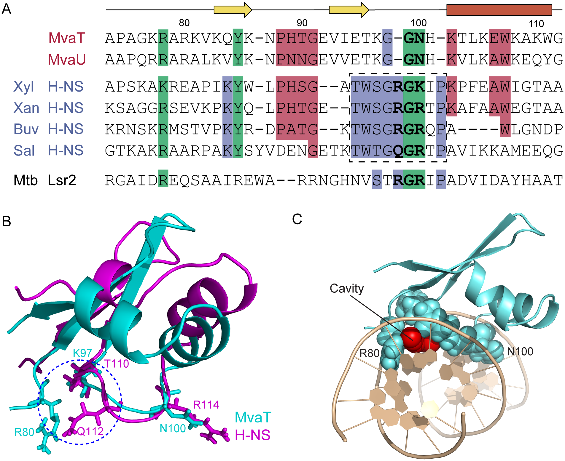 Sequence alignments and structural comparisons of MvaT<sub>ctd</sub> with AT-hook-like motif containing DNA-binding domains.