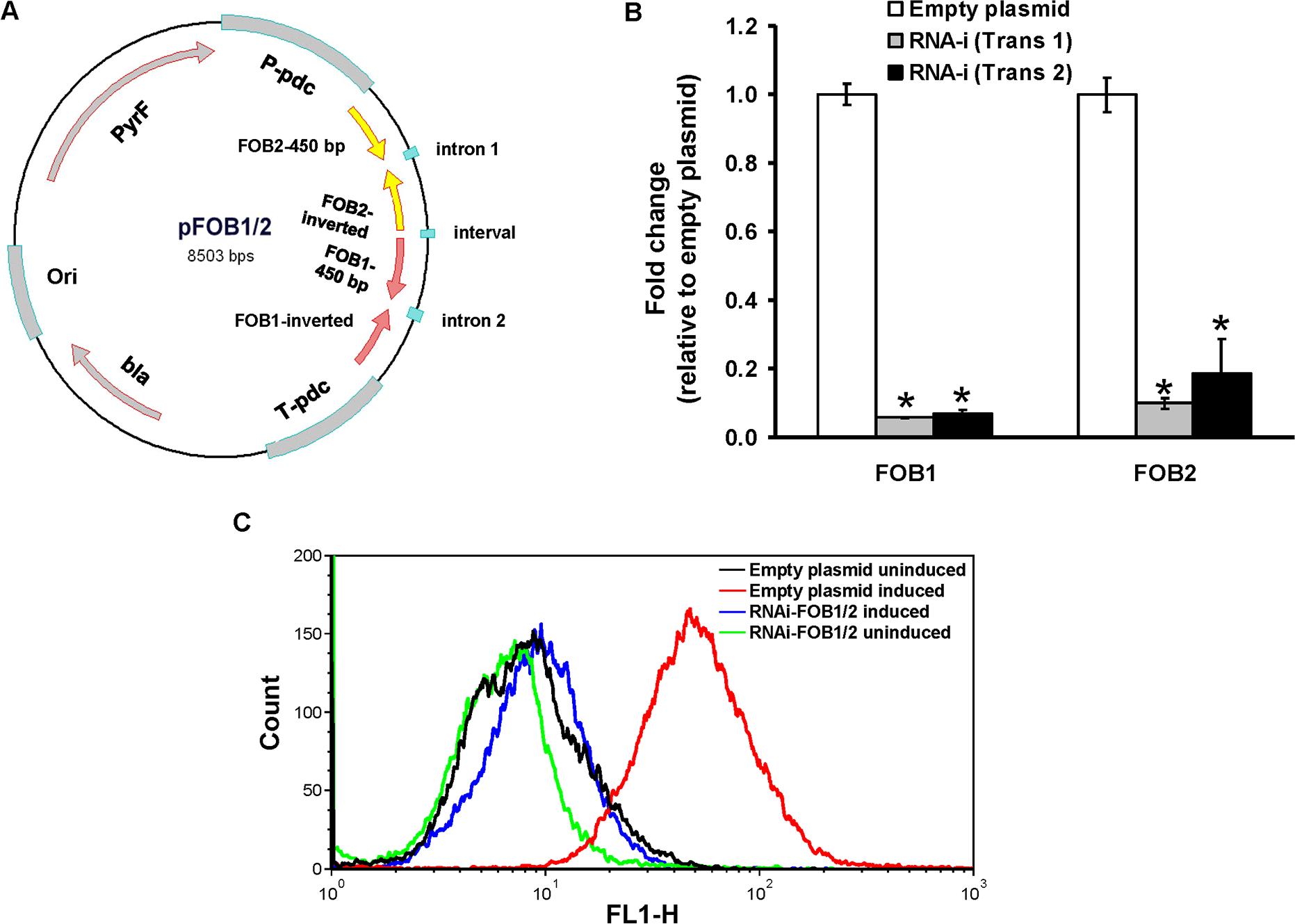 Dual gene inhibition strategy completely abrogates <i>FOB1</i> and <i>FOB2</i> expression.