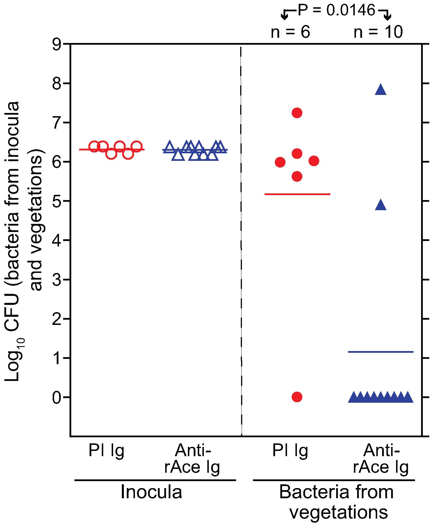 Passive immunization (anti-rAce Ig versus PI Ig) in rat endocarditis model.