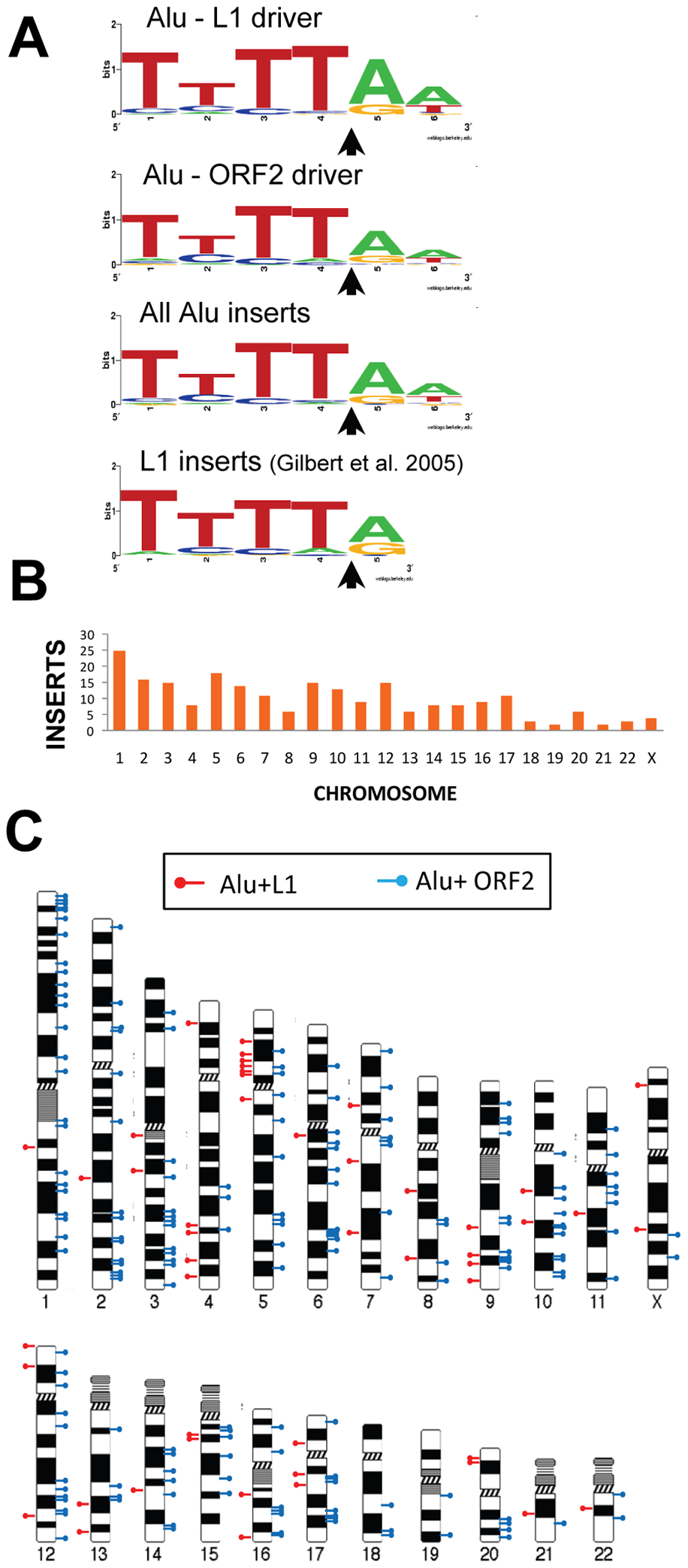Endonuclease target site and chromosomal distribution of recovered Alu inserts.