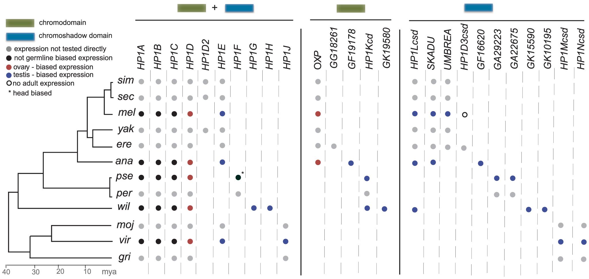 HP1 gene compendia in the 12 Drosophila species.