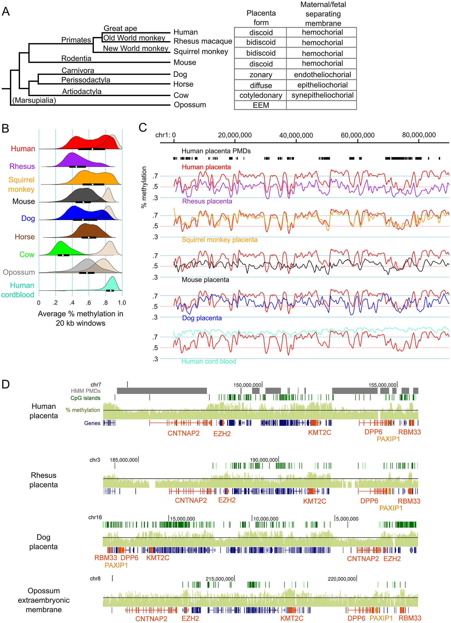 Genome-wide methylation patterns in mammalian placentas show both large-scale divergence and gene-specific similarities.